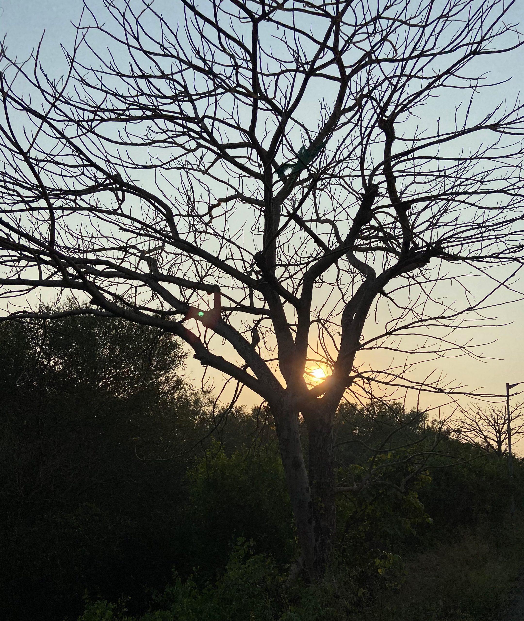 Sunset through a tree