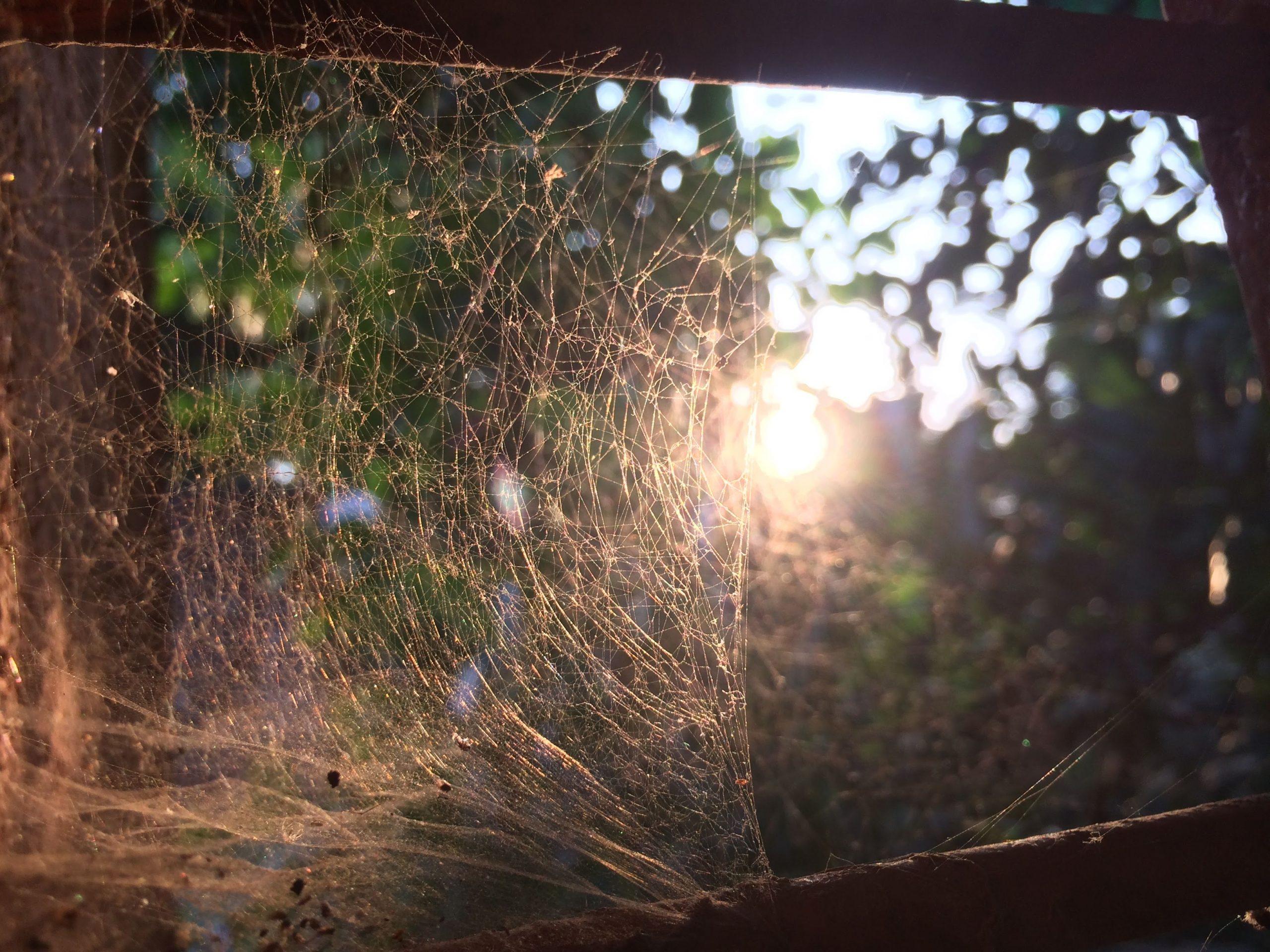 Sunshine view through spider web