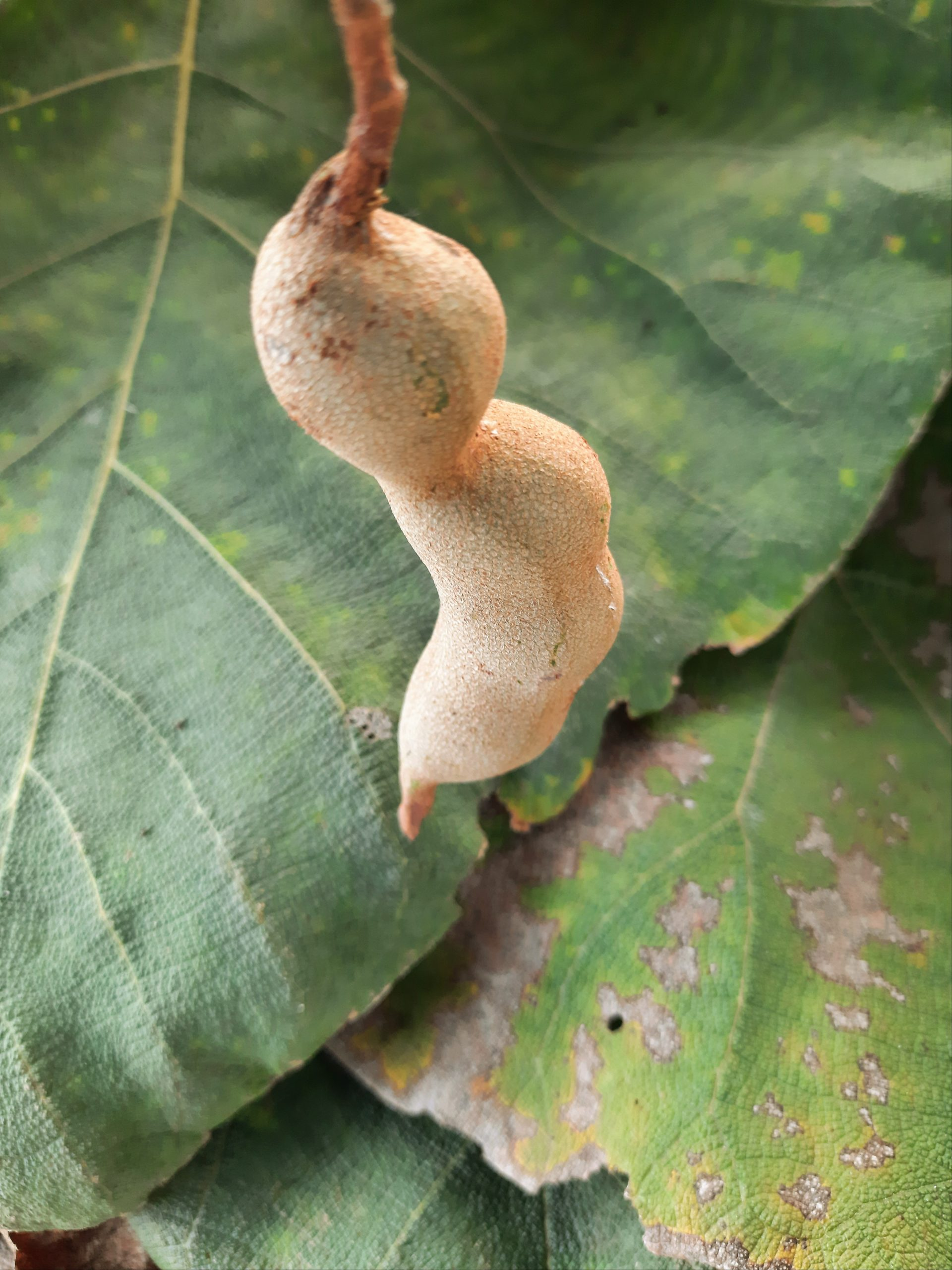 Wild fruit hanging