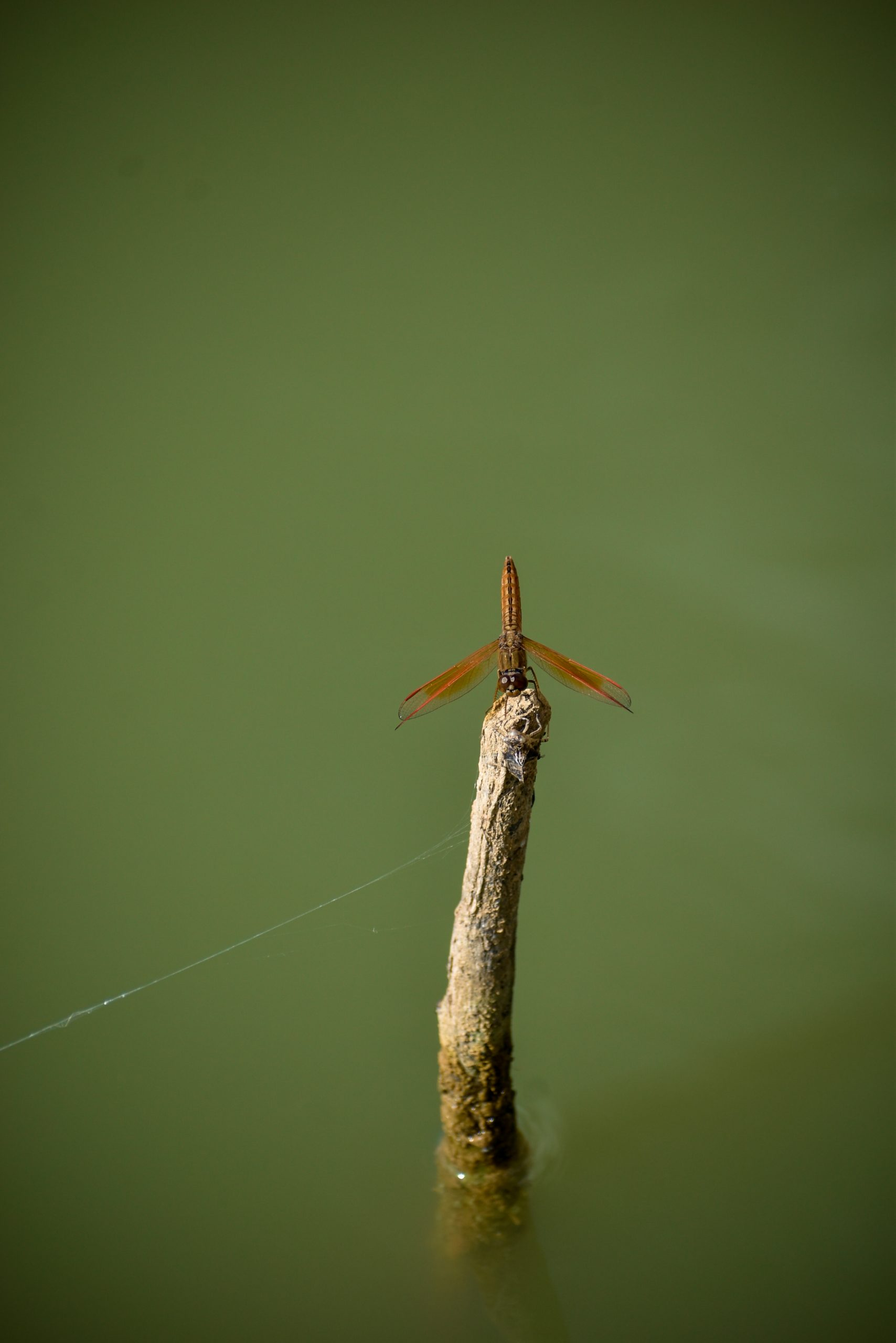 An insect on a stick
