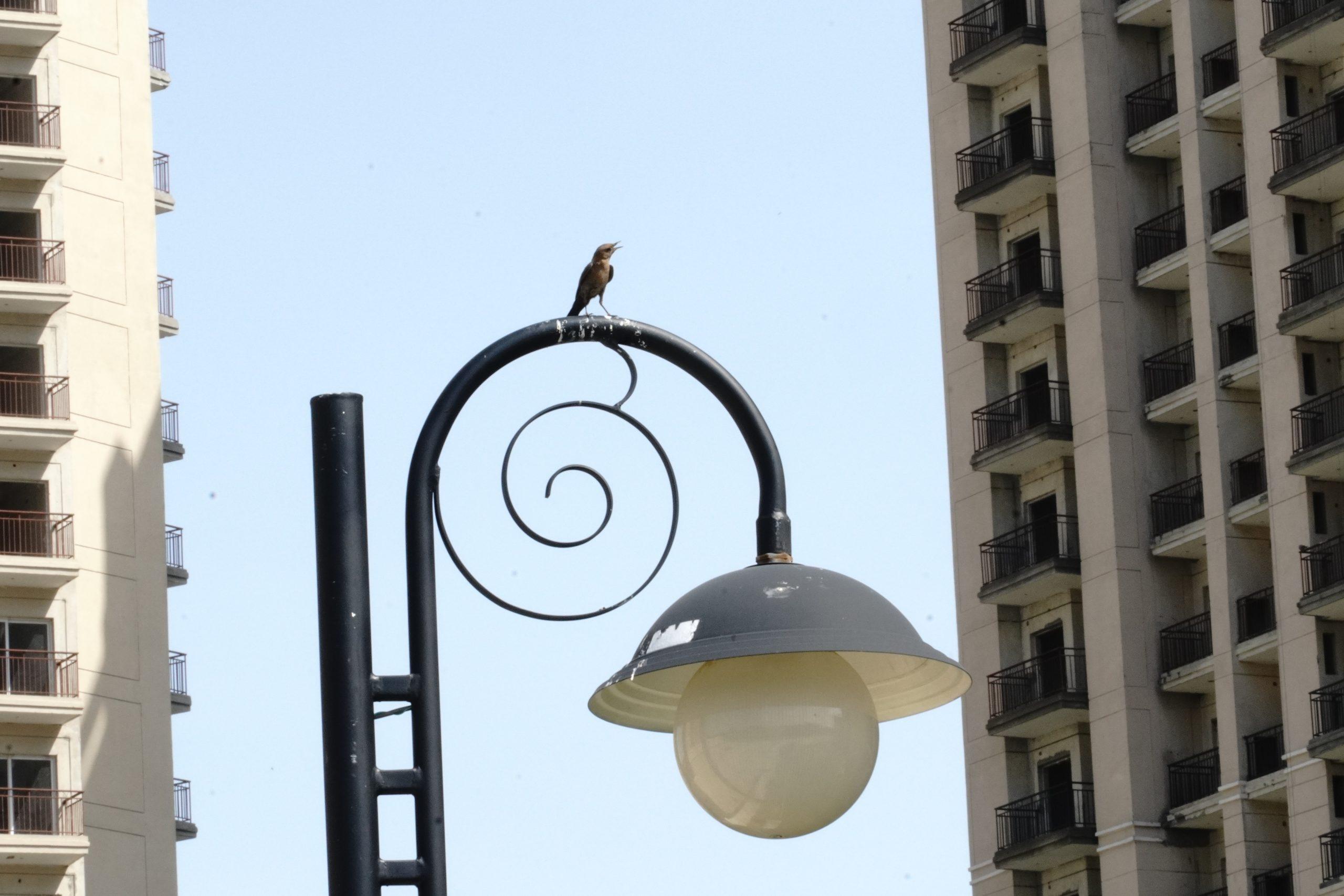bird on top of a street lamp