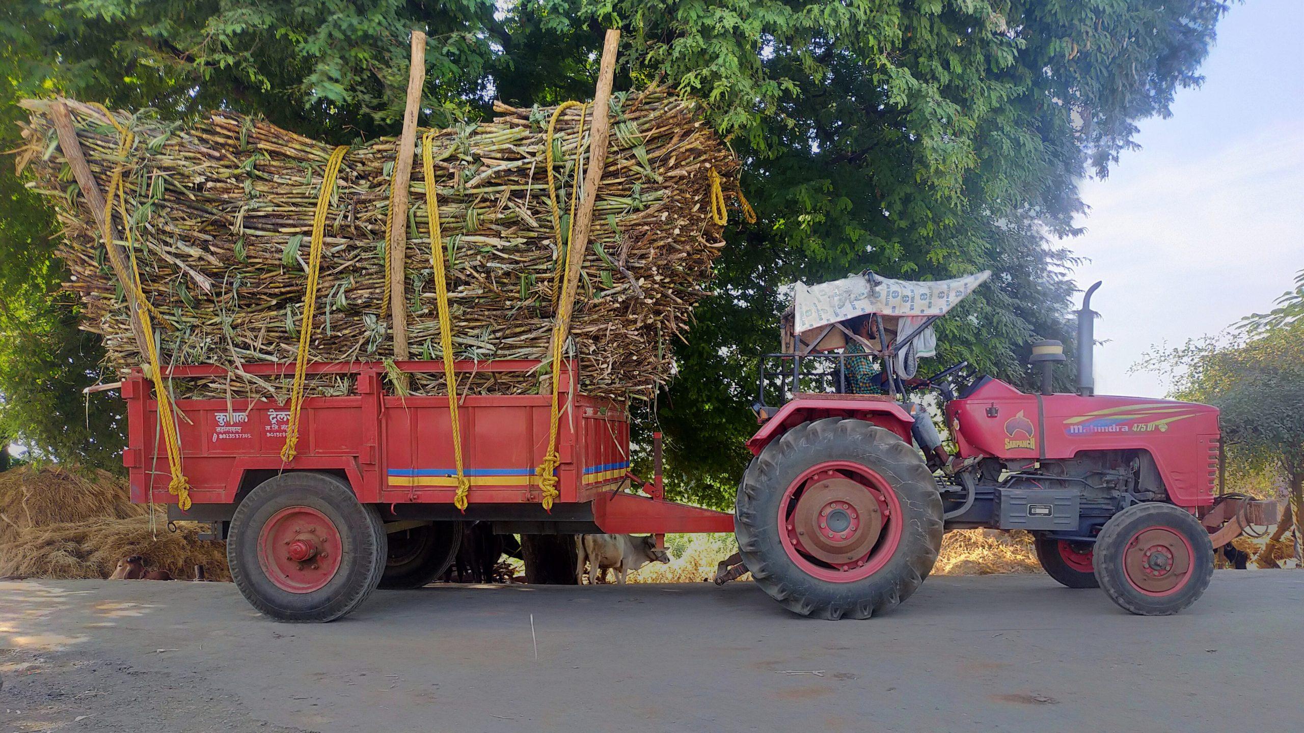 tractor with sugarcanes