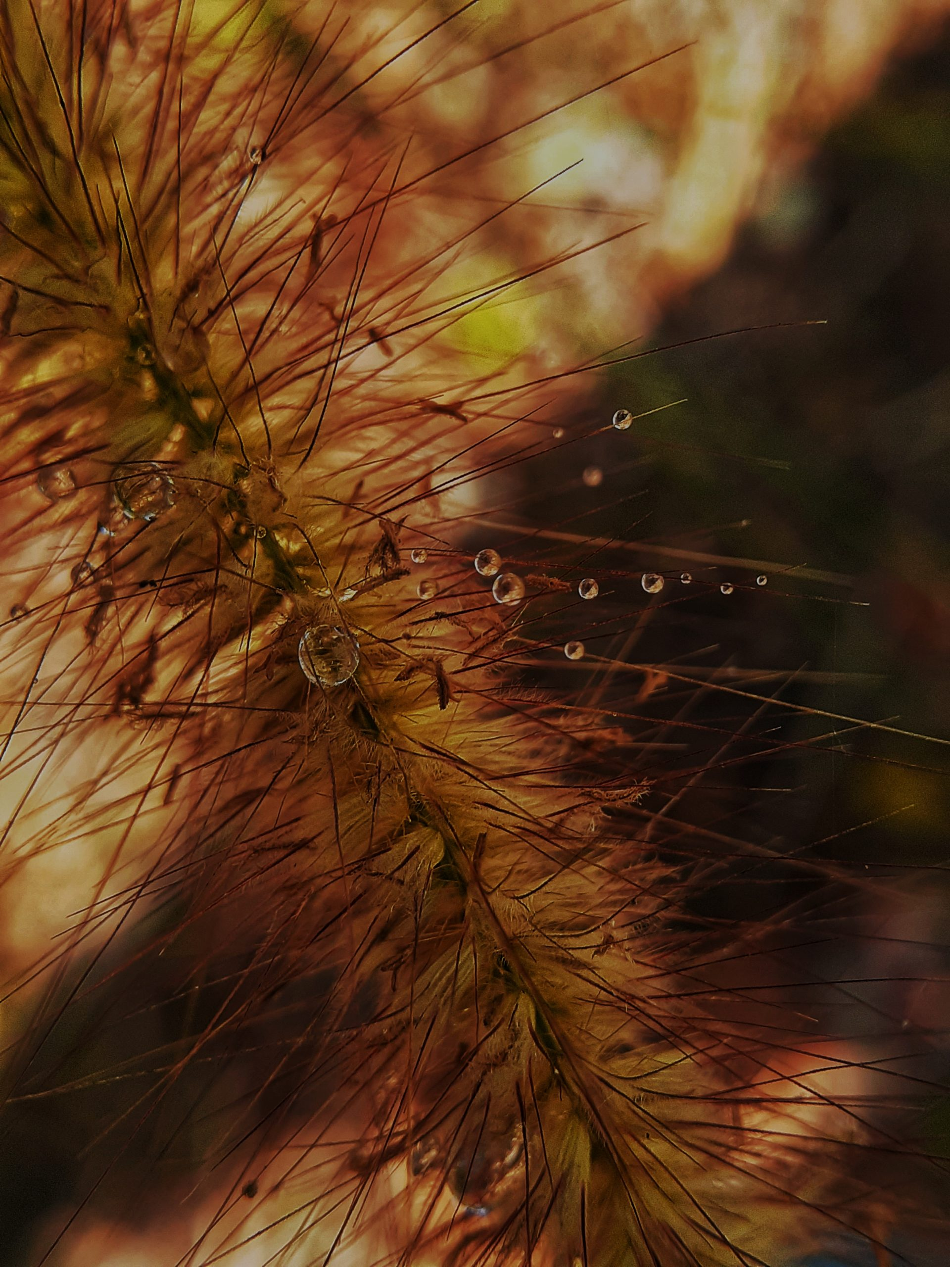 Waterdrops on a plant