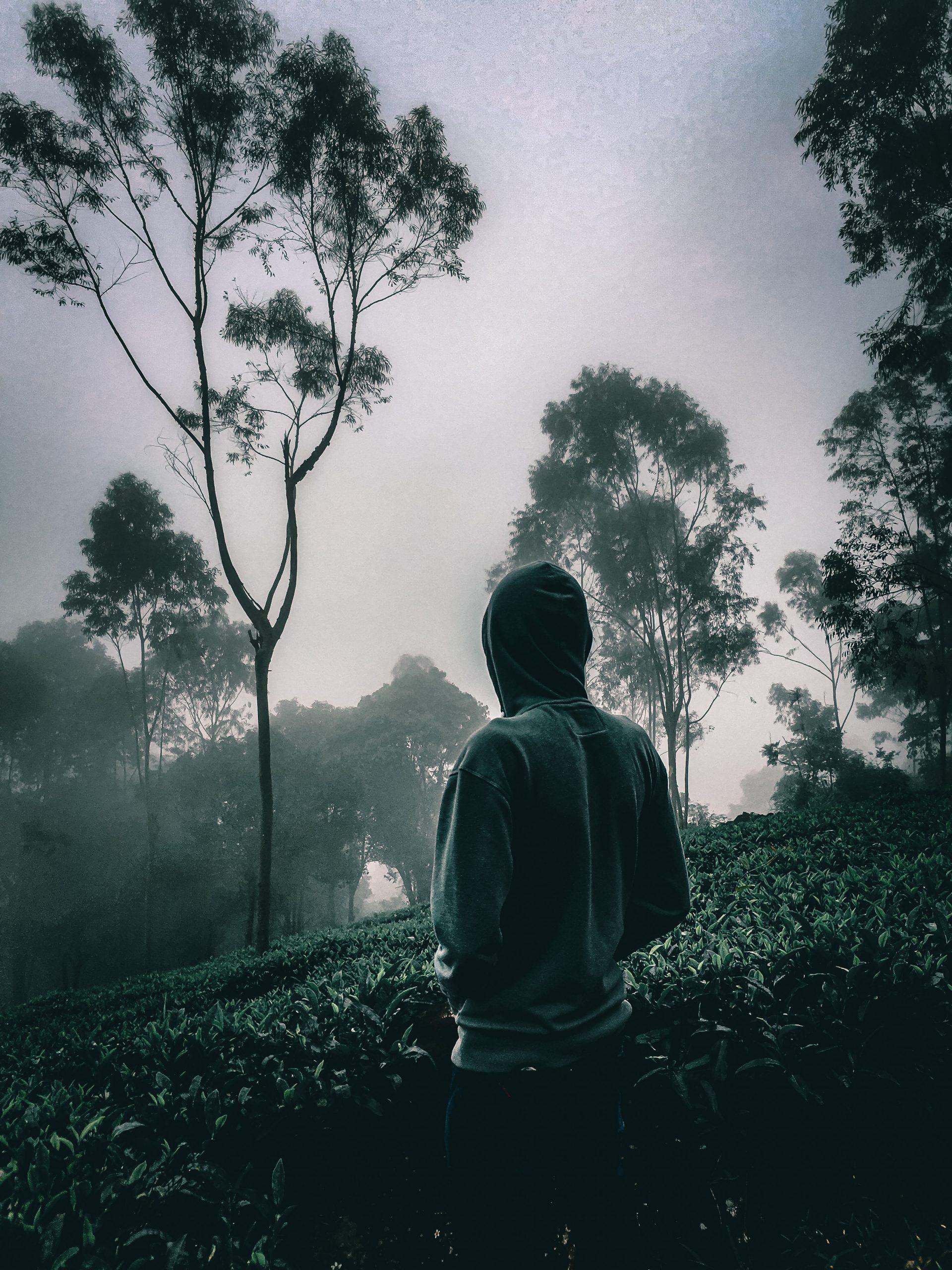 A man in a tea garden
