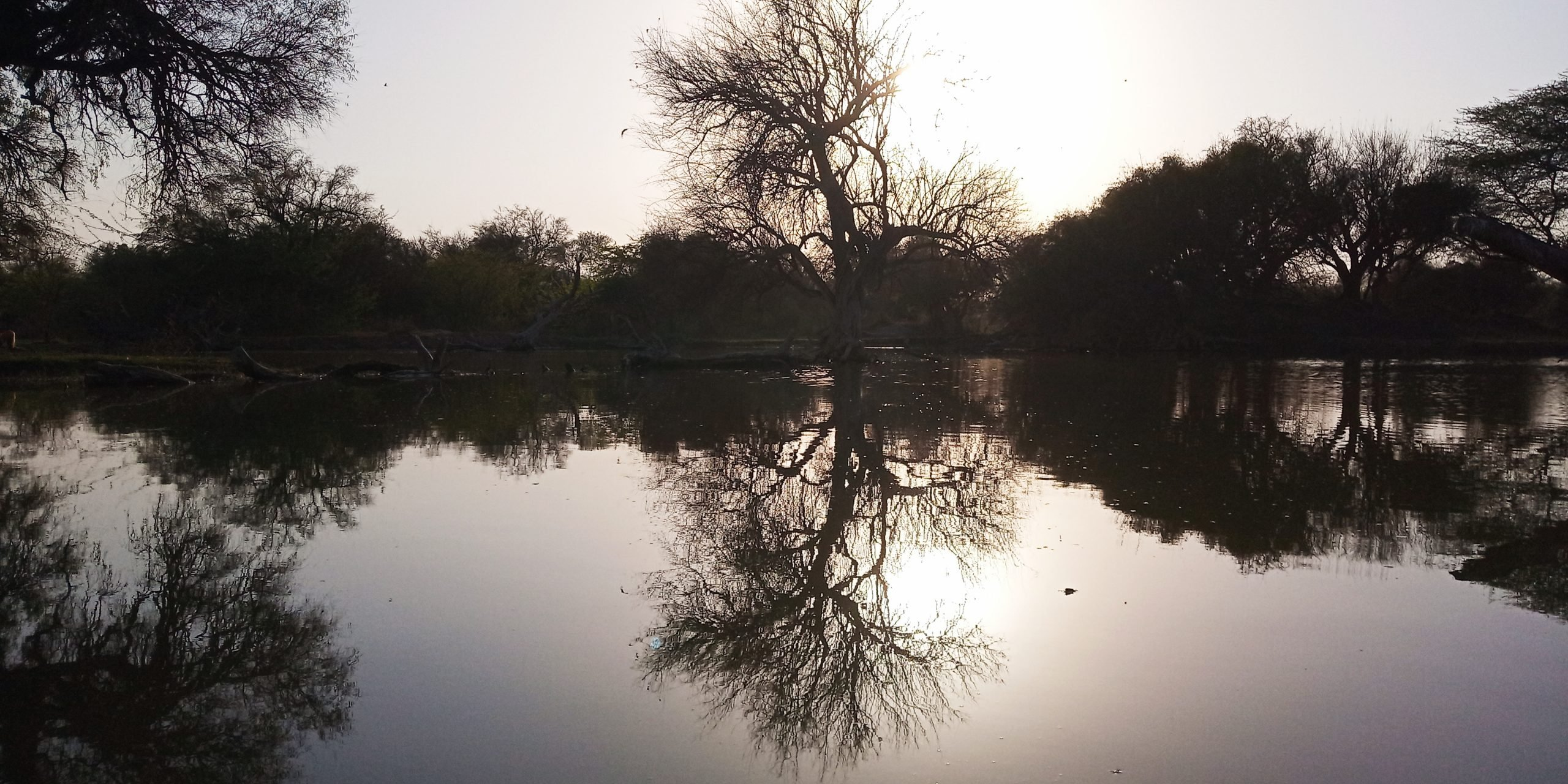 Lake in daylight and surrounded by tree