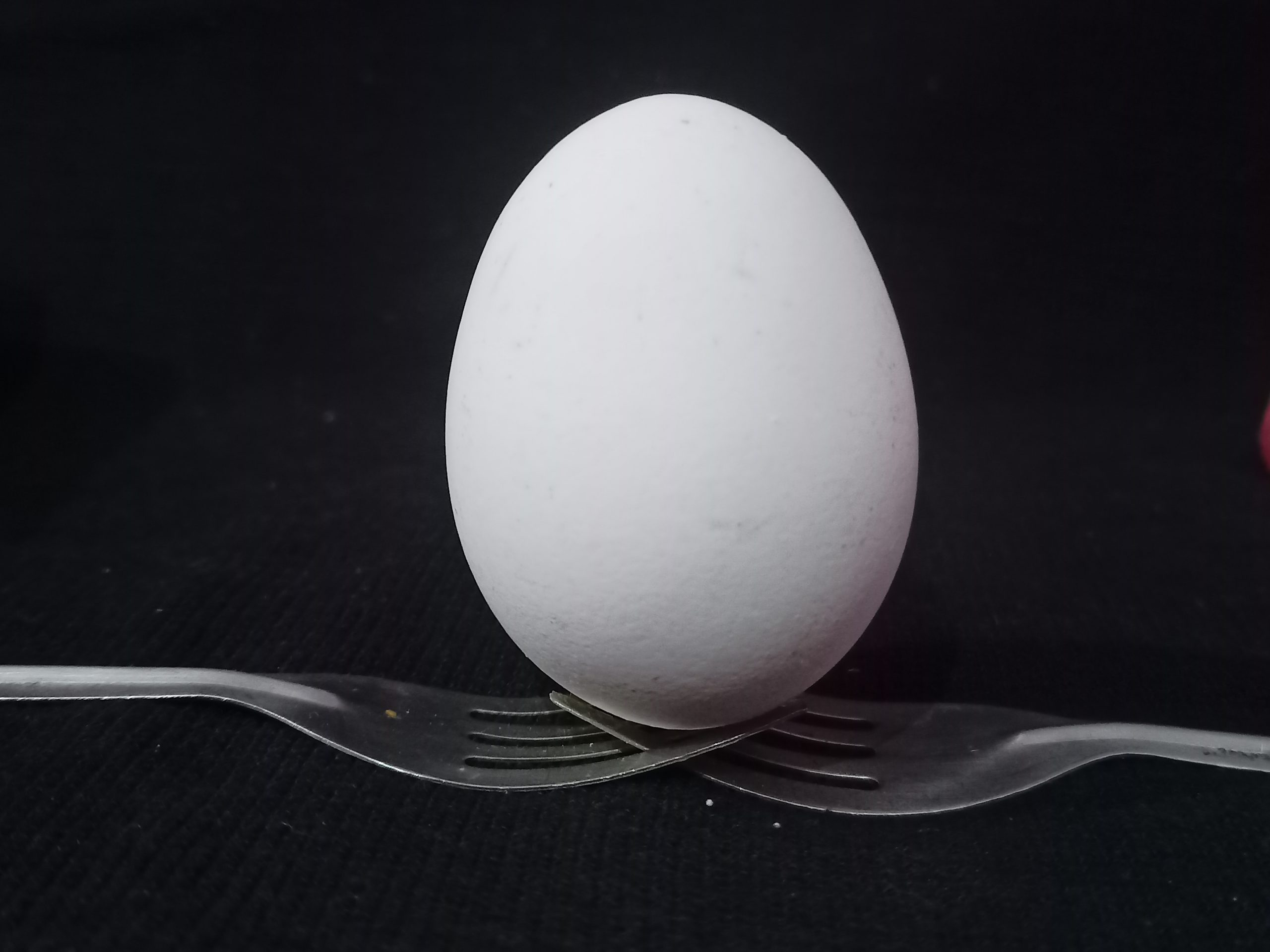 White Egg Close-up