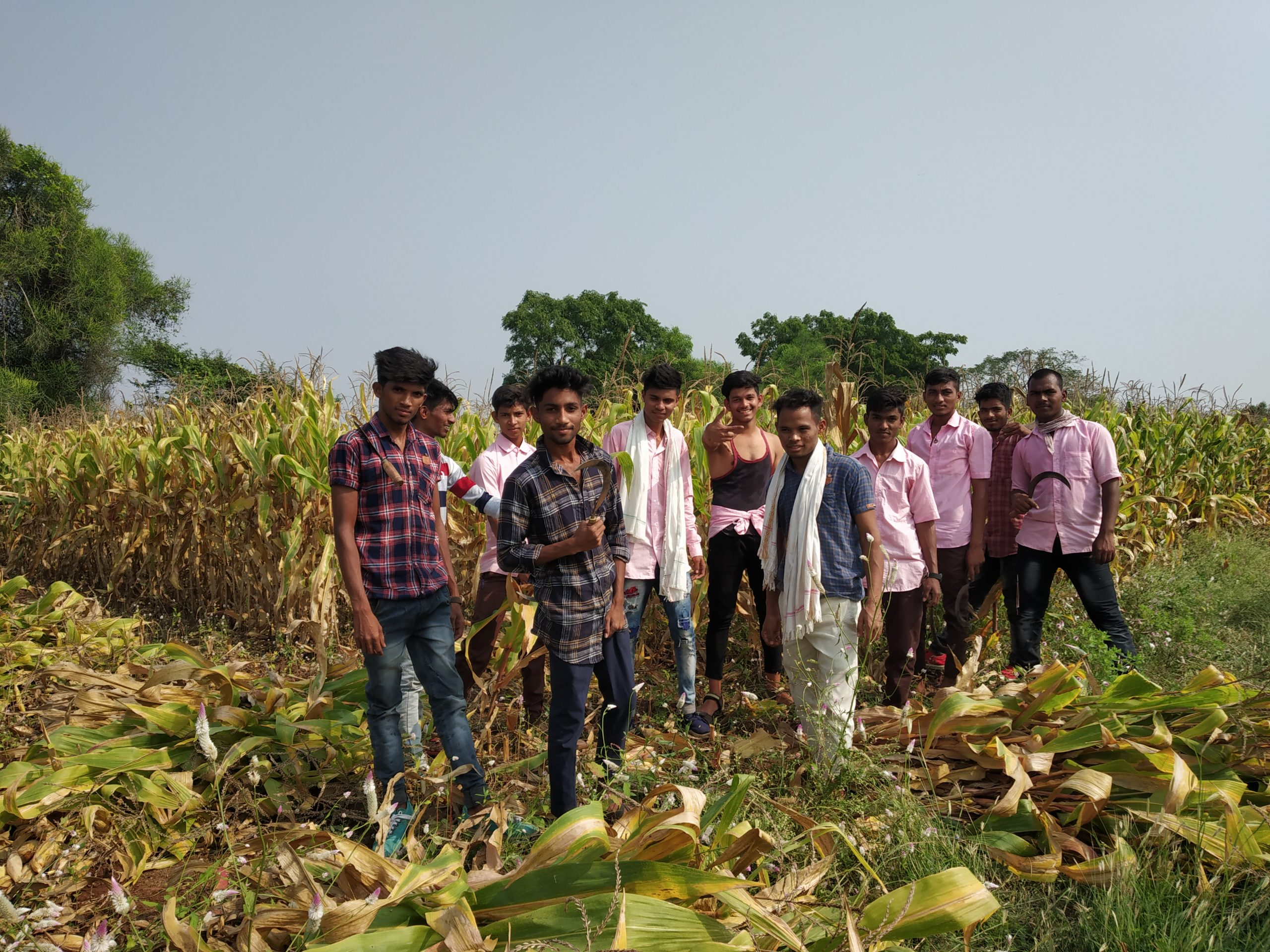 Young farmers in maize fields
