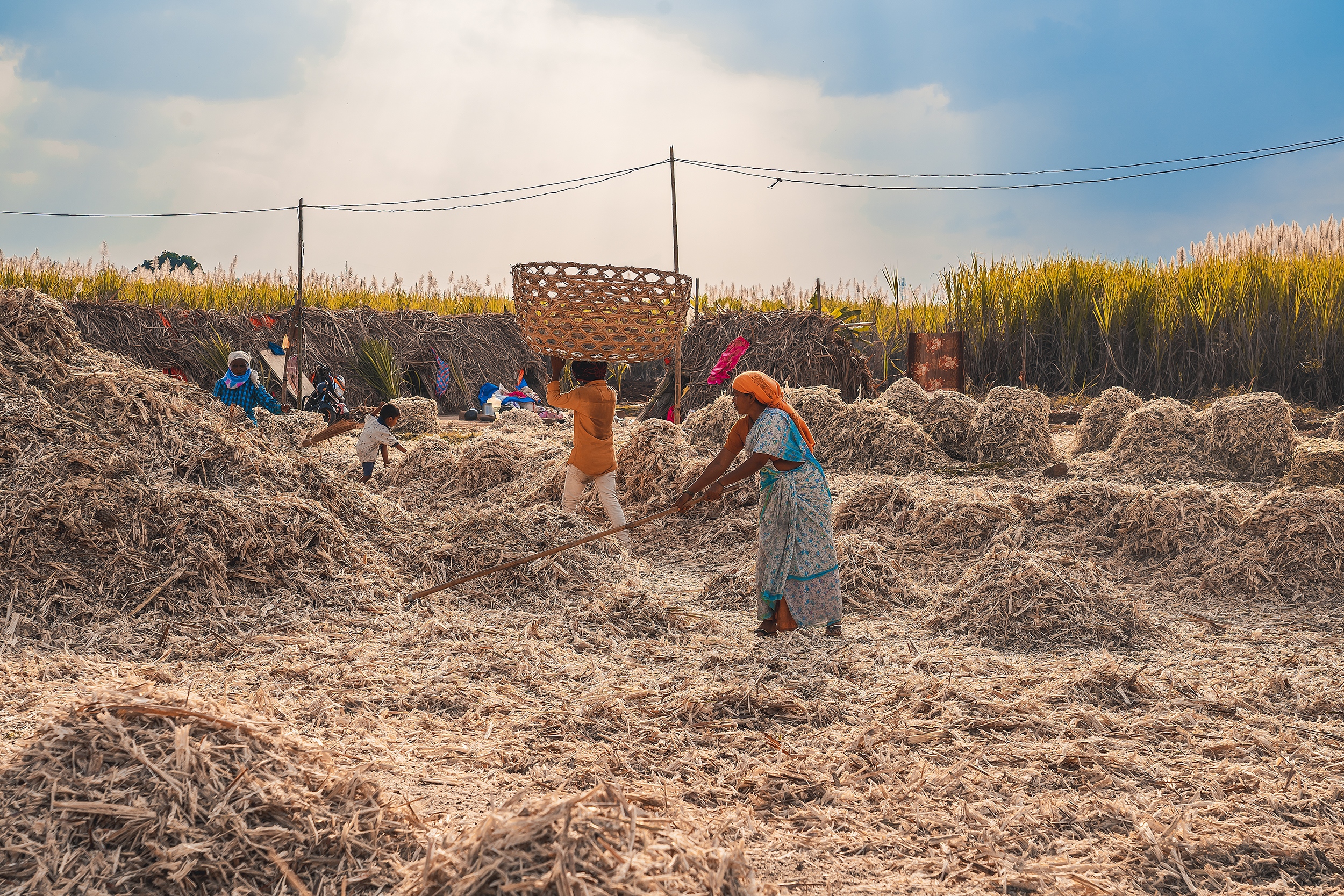 Workers working in farm