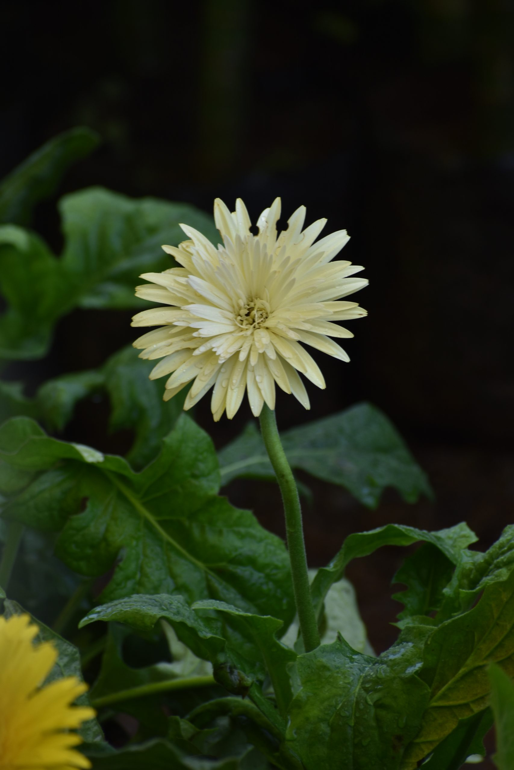 a blooming white flower