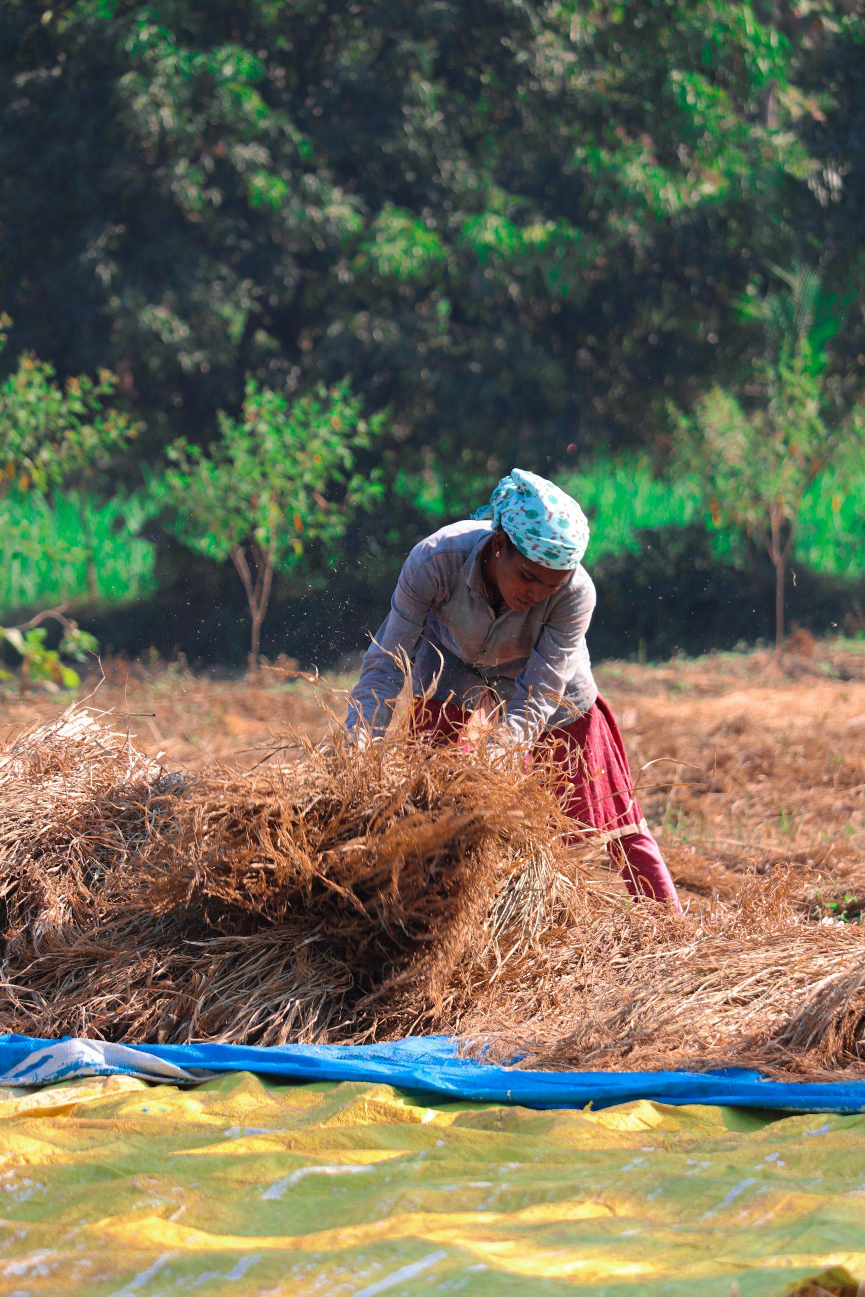 a farmer in a farm