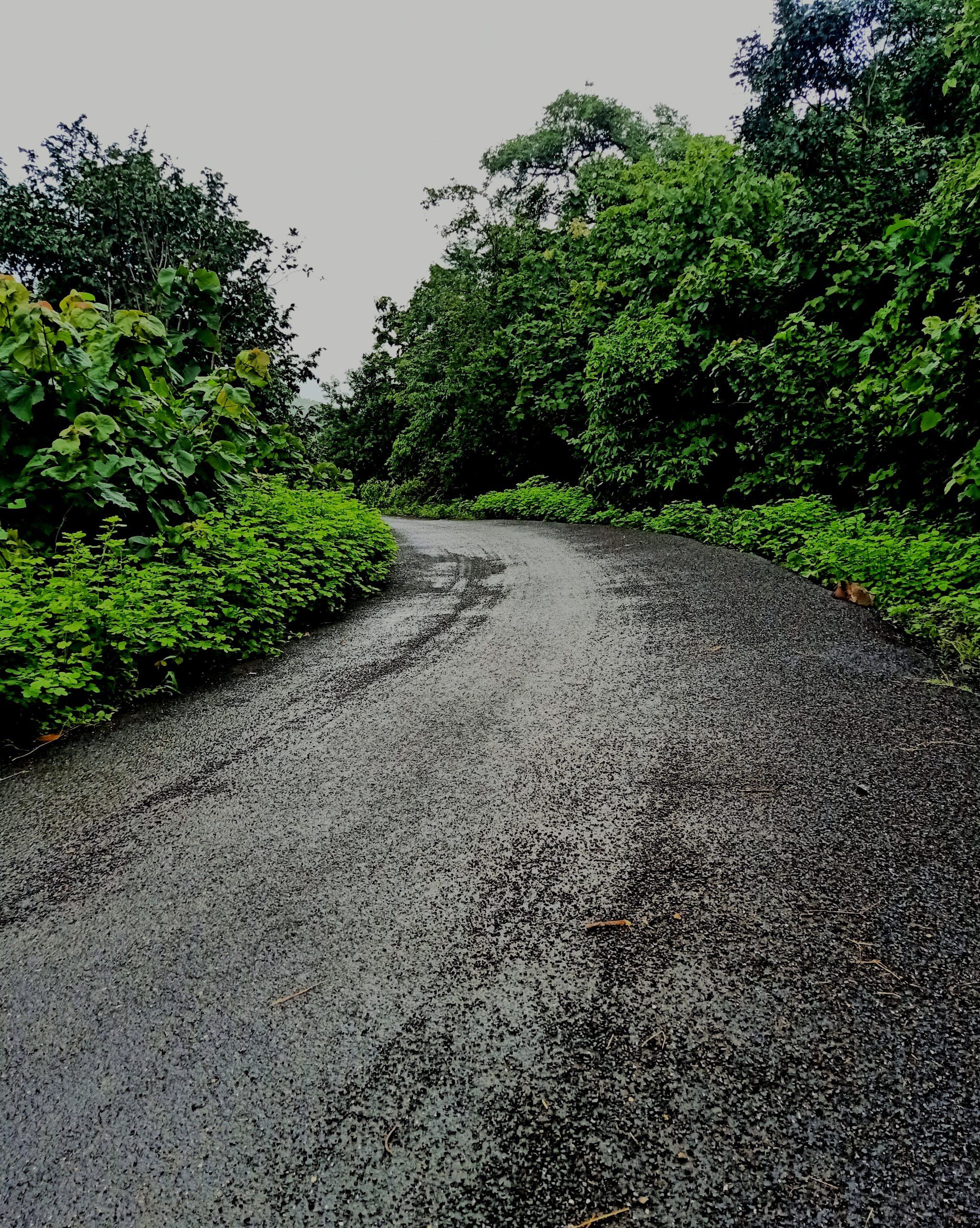 a road among trees