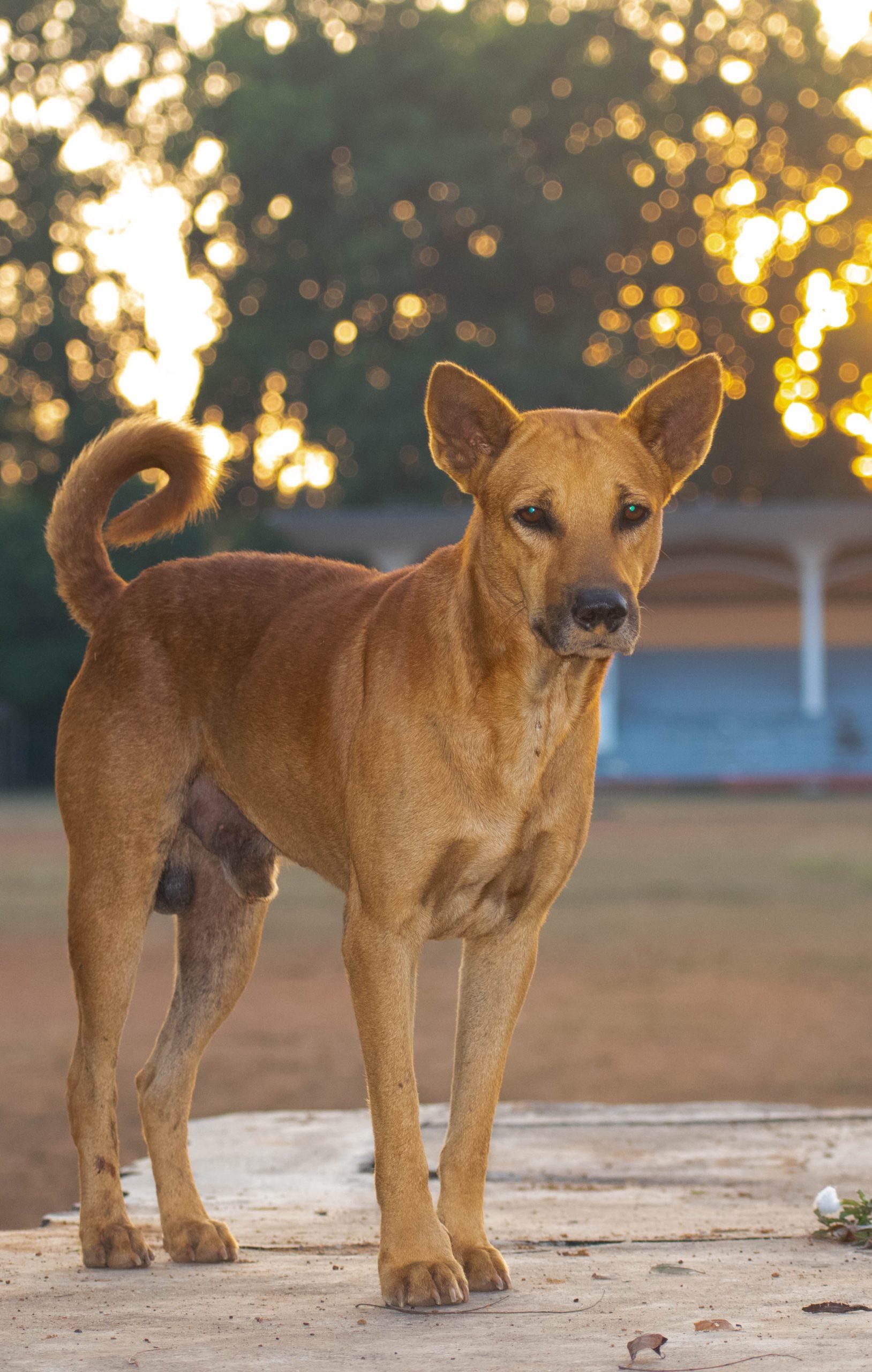 a stray dog