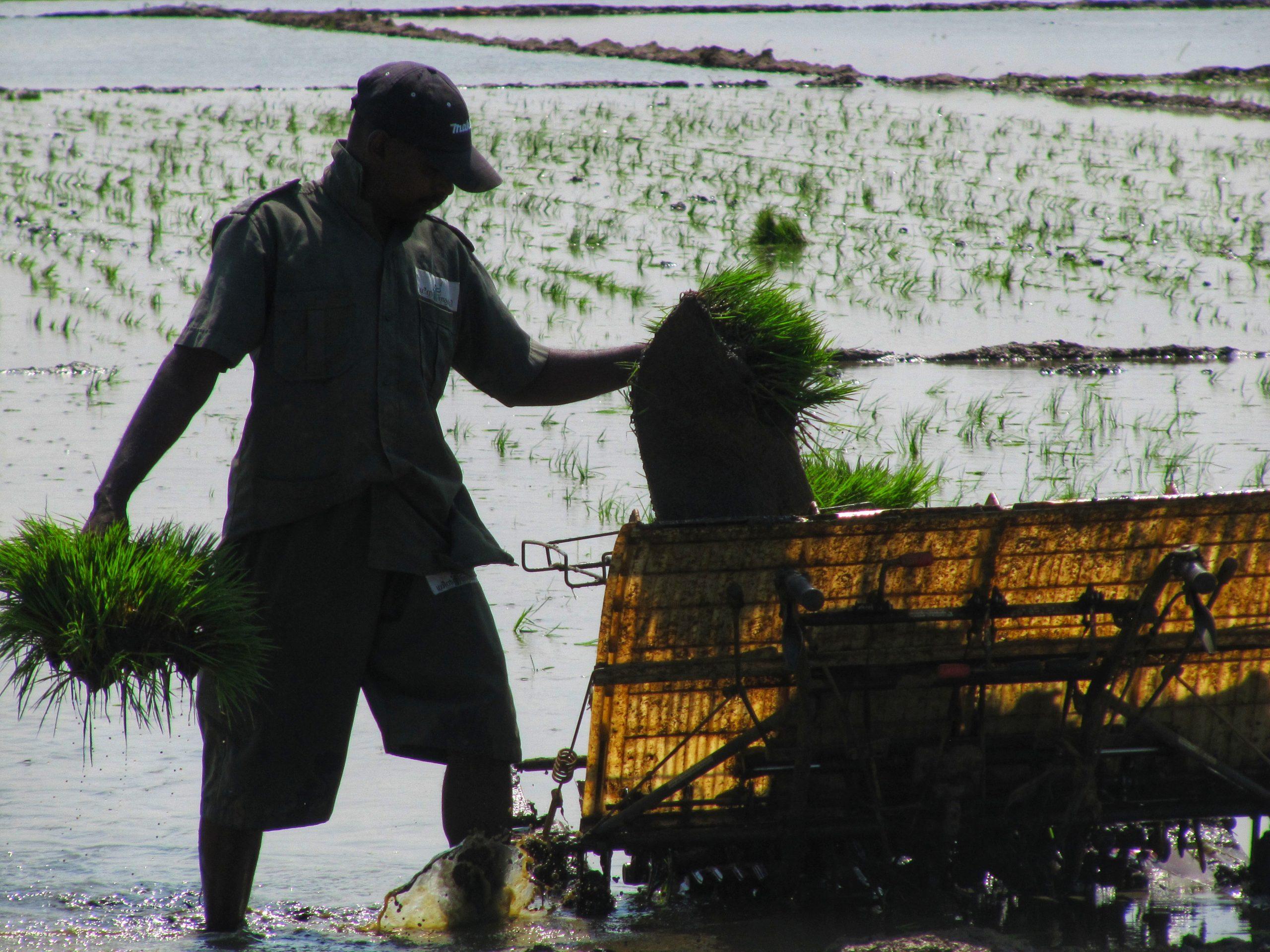 a working farmer