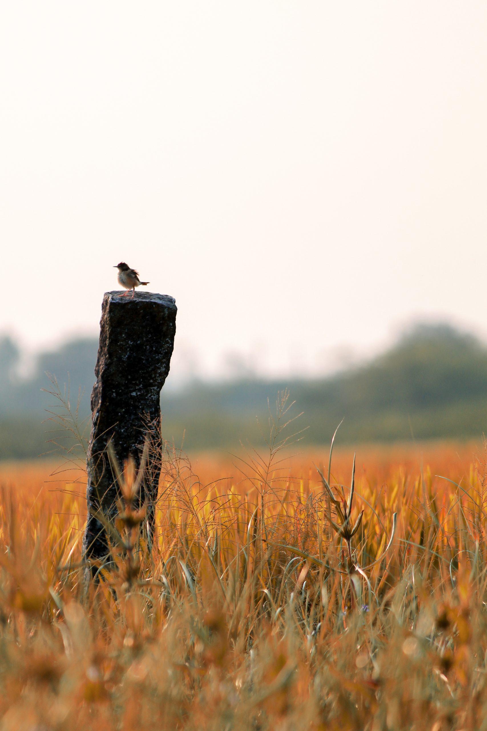 A tiny bird on a pole