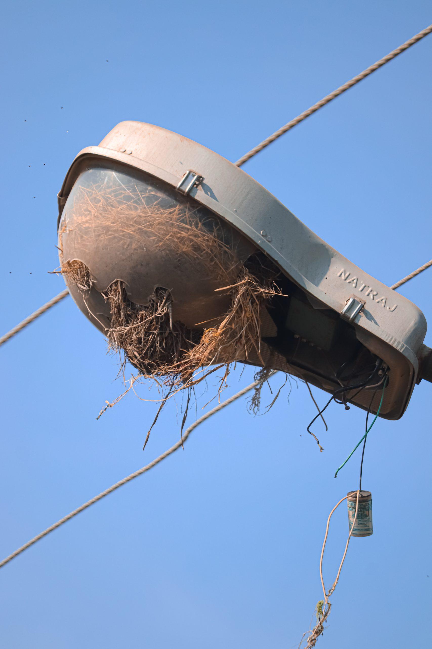 Birds' nest in a street light lamp