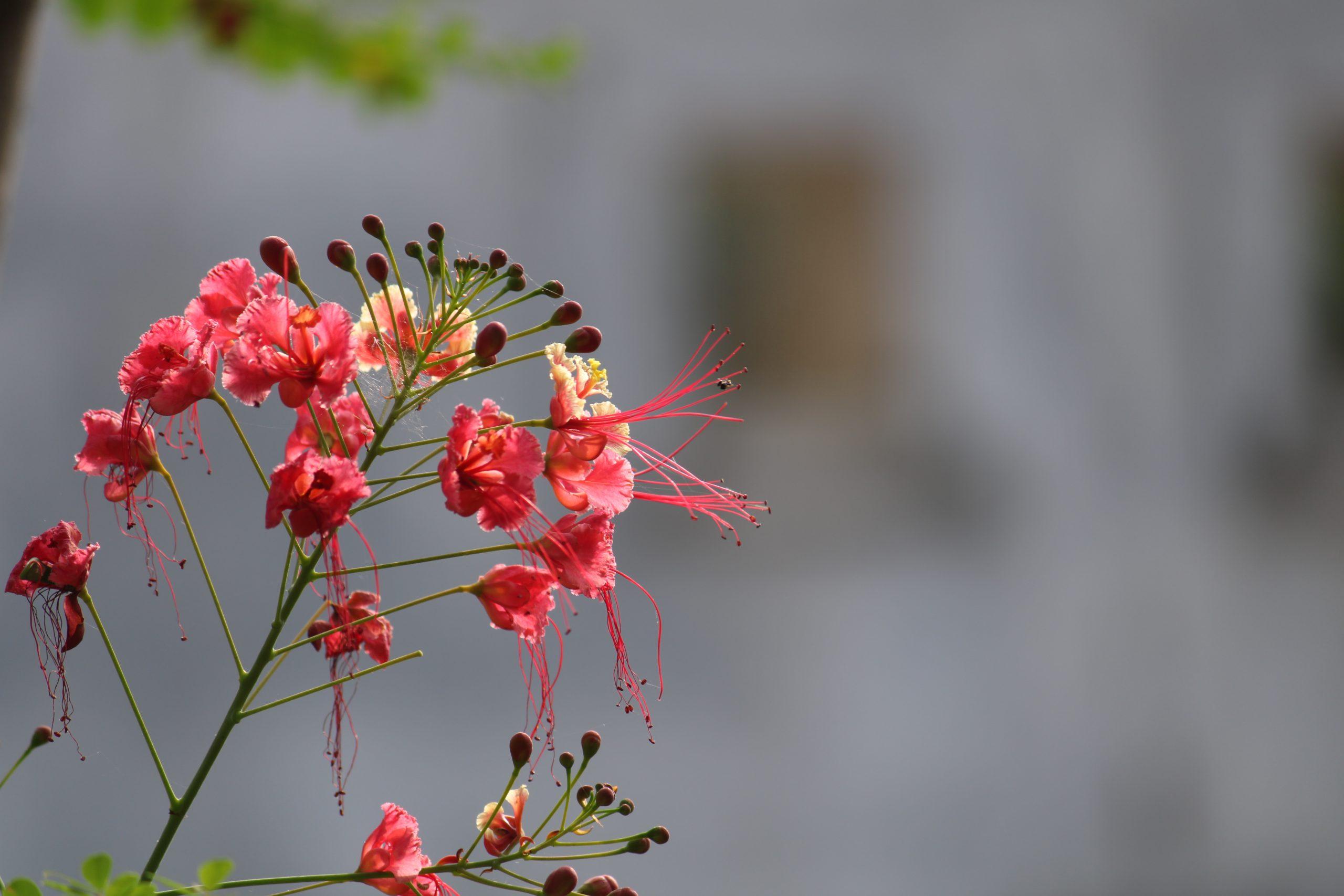 blooming wildflowers