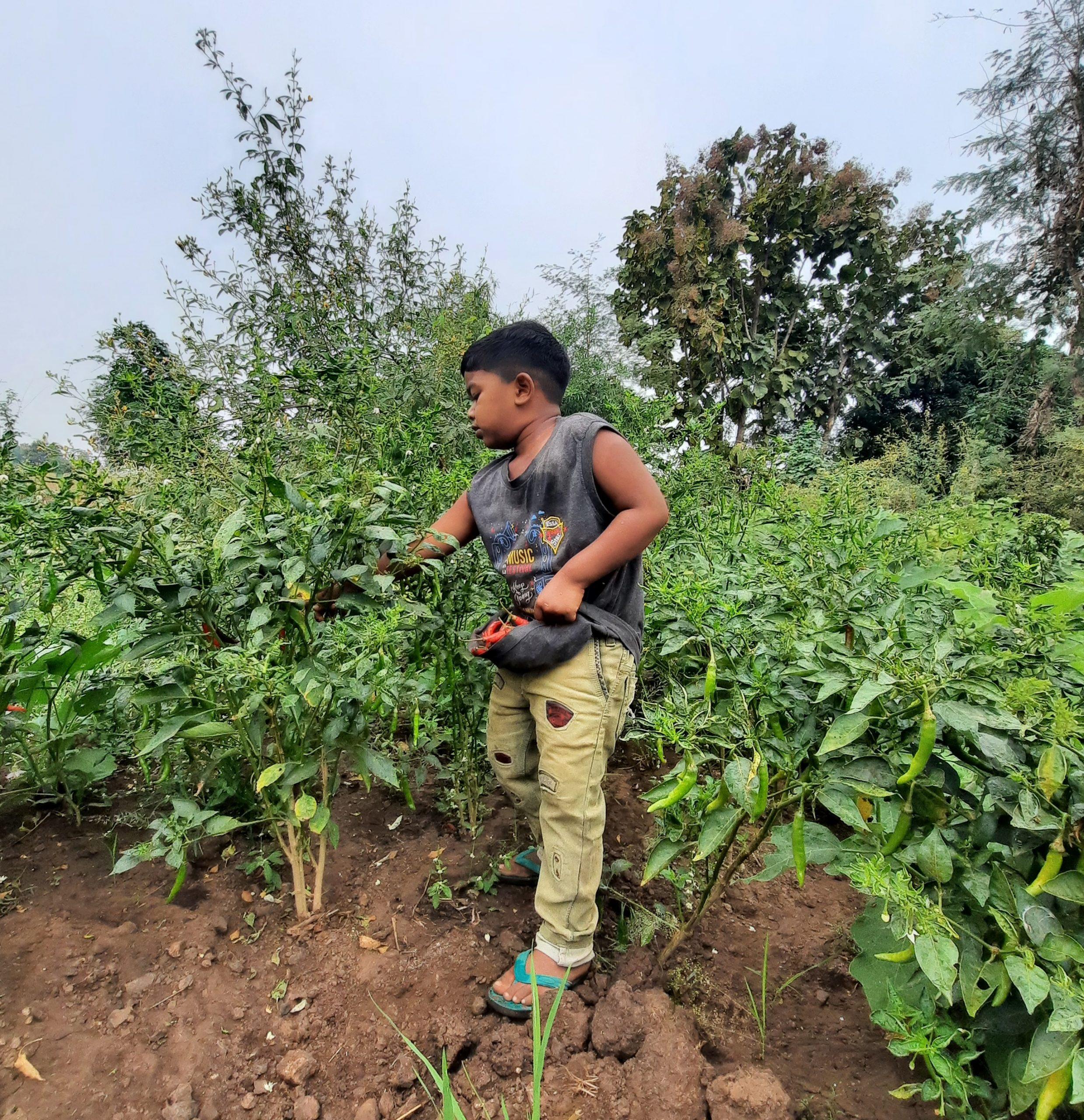 boy harvesting