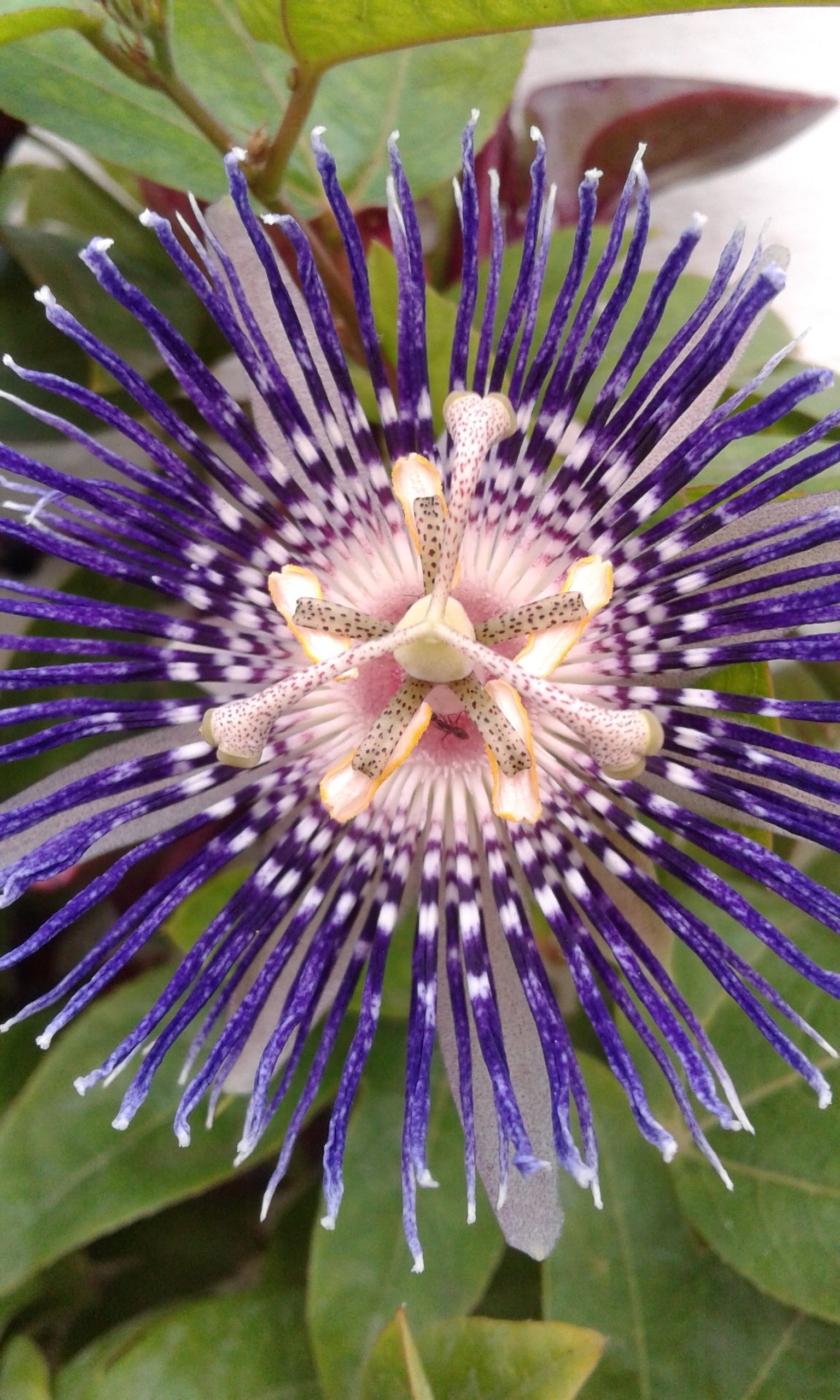 close-up of a blooming flower