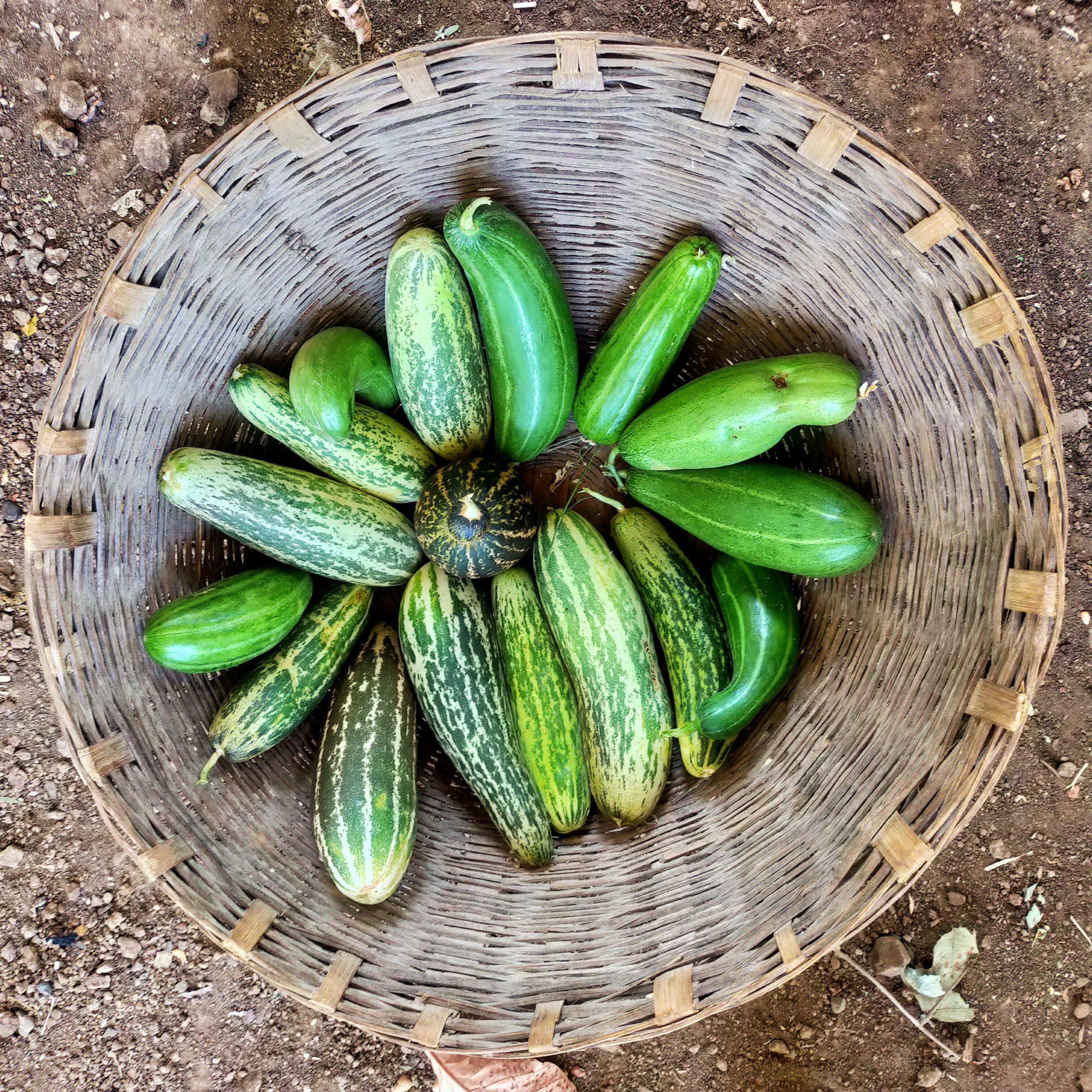 cucumbers in a basket