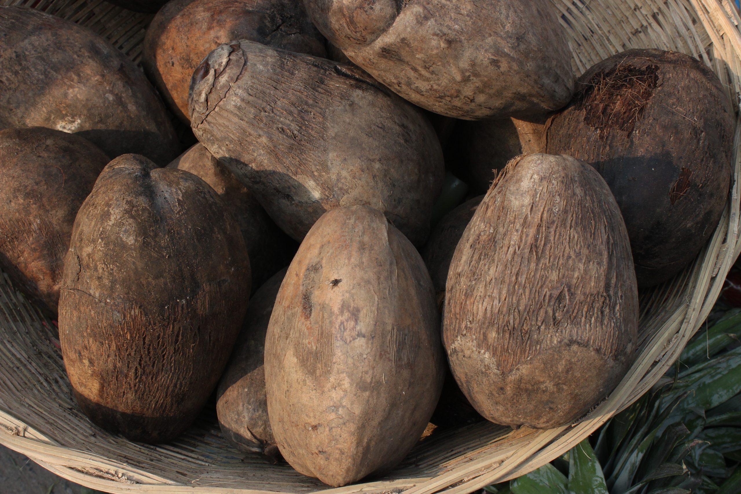Coconuts in basket