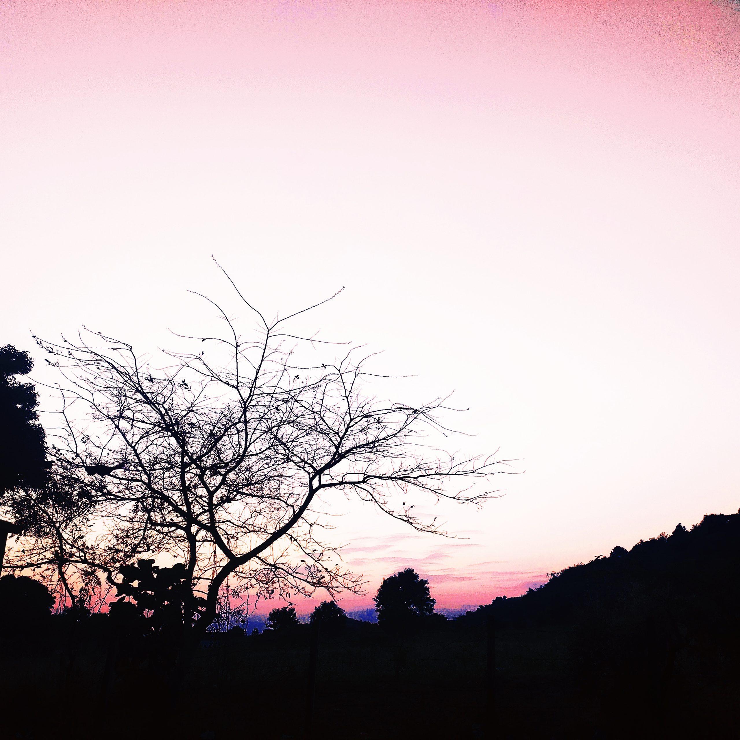 An evening
