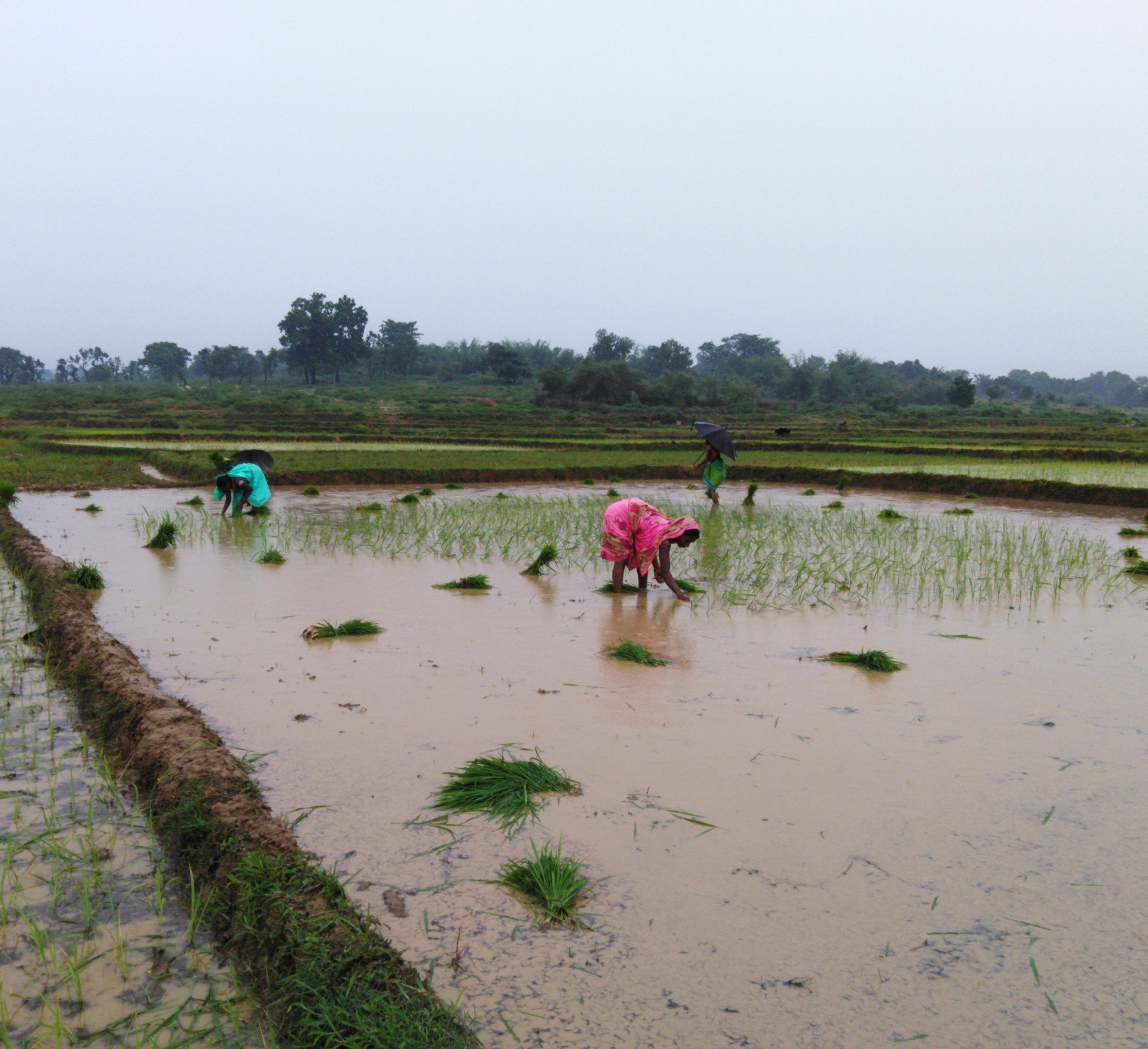 farmers sowing crops