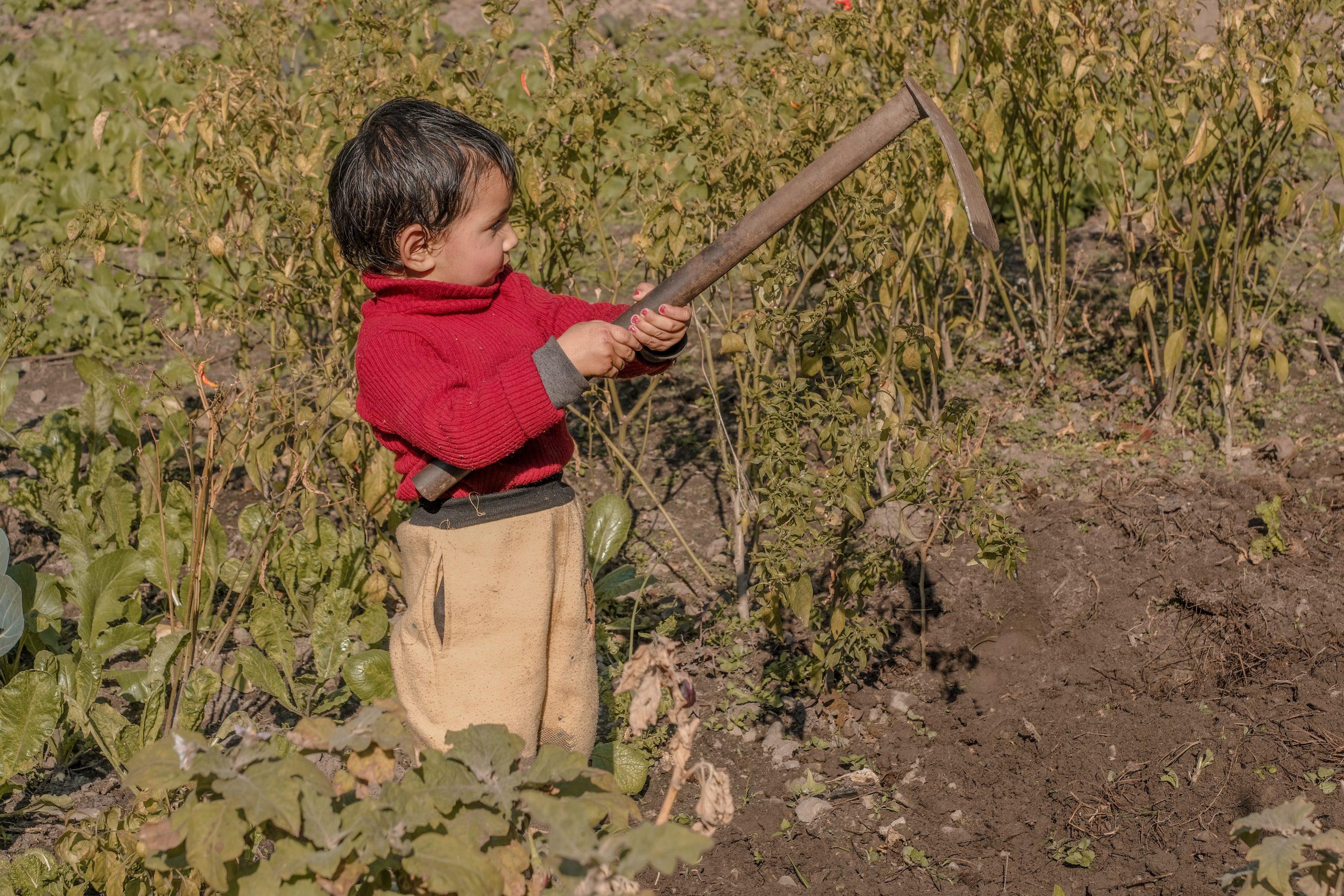 A baby farmer