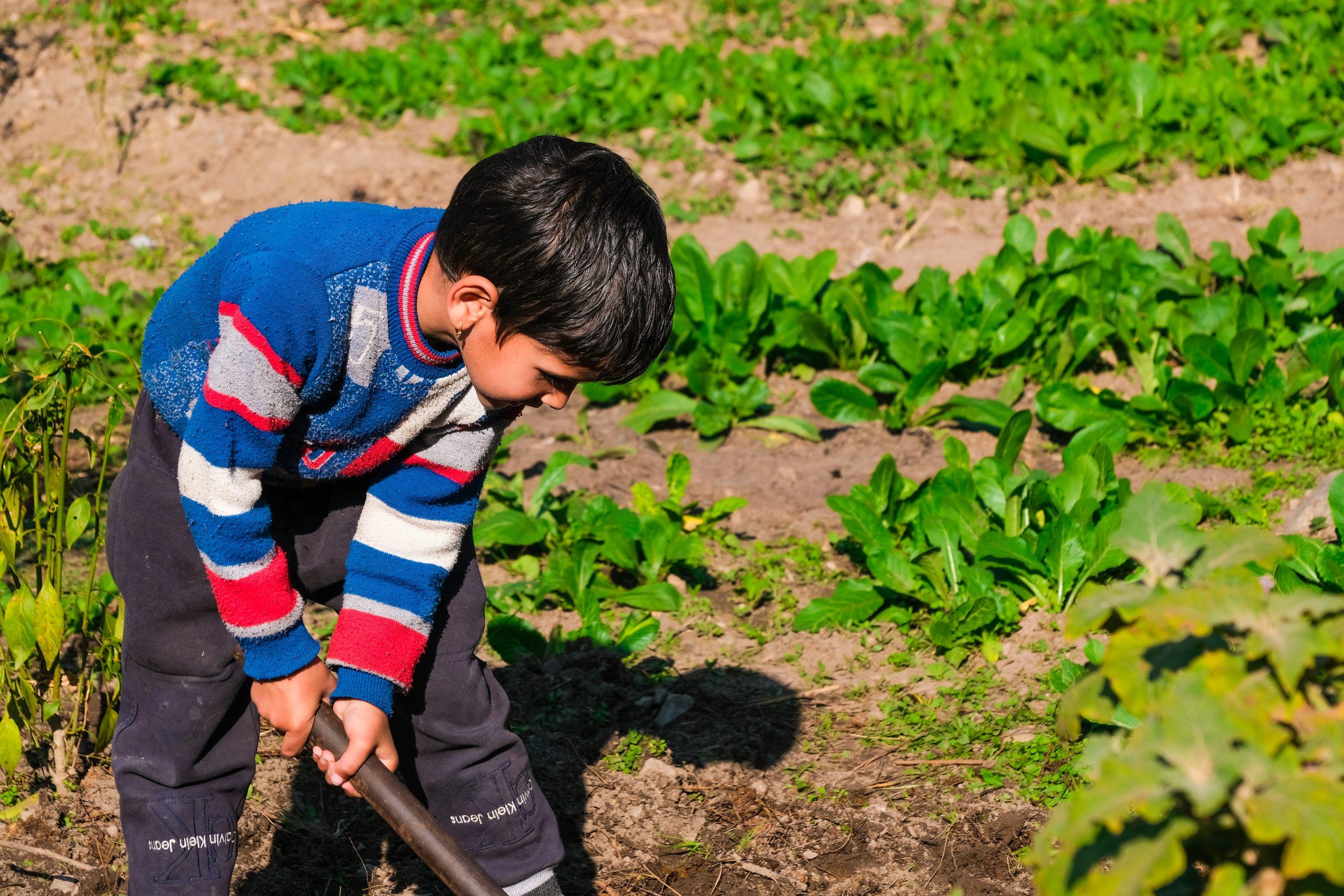 Child farming in the field