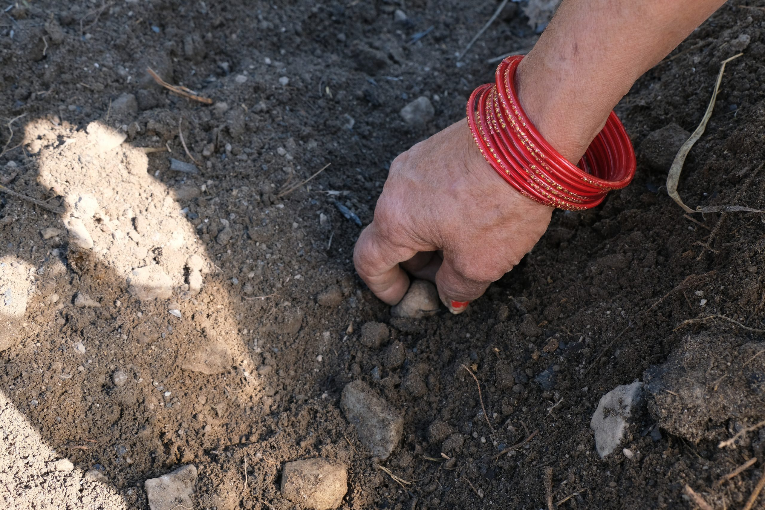 A farmer picking stone from soil