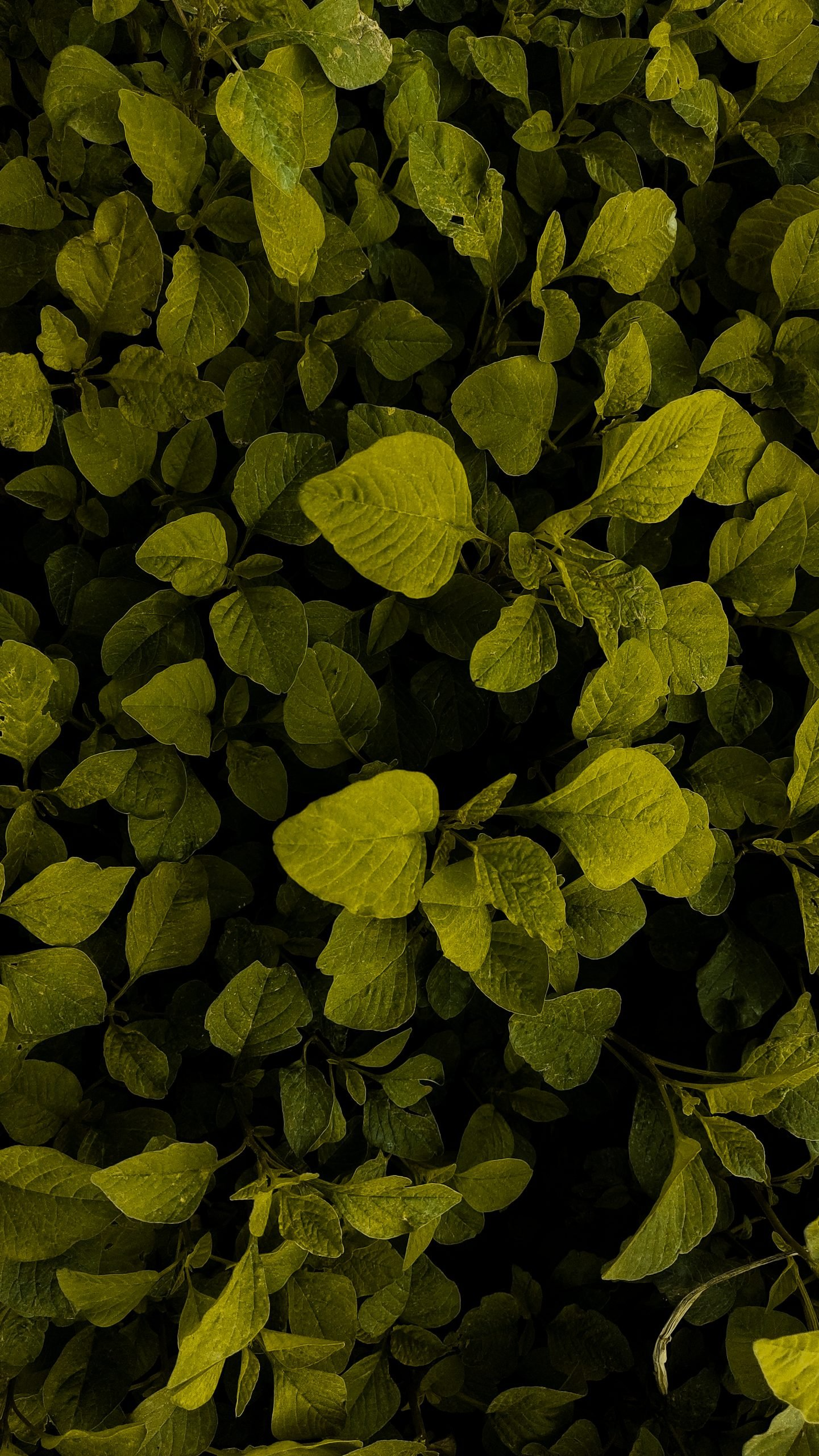 leaves that are green