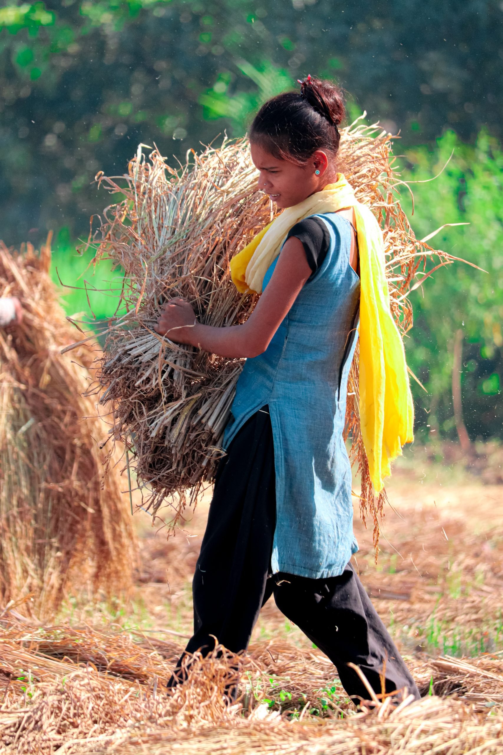 A village girl carrying dry crops