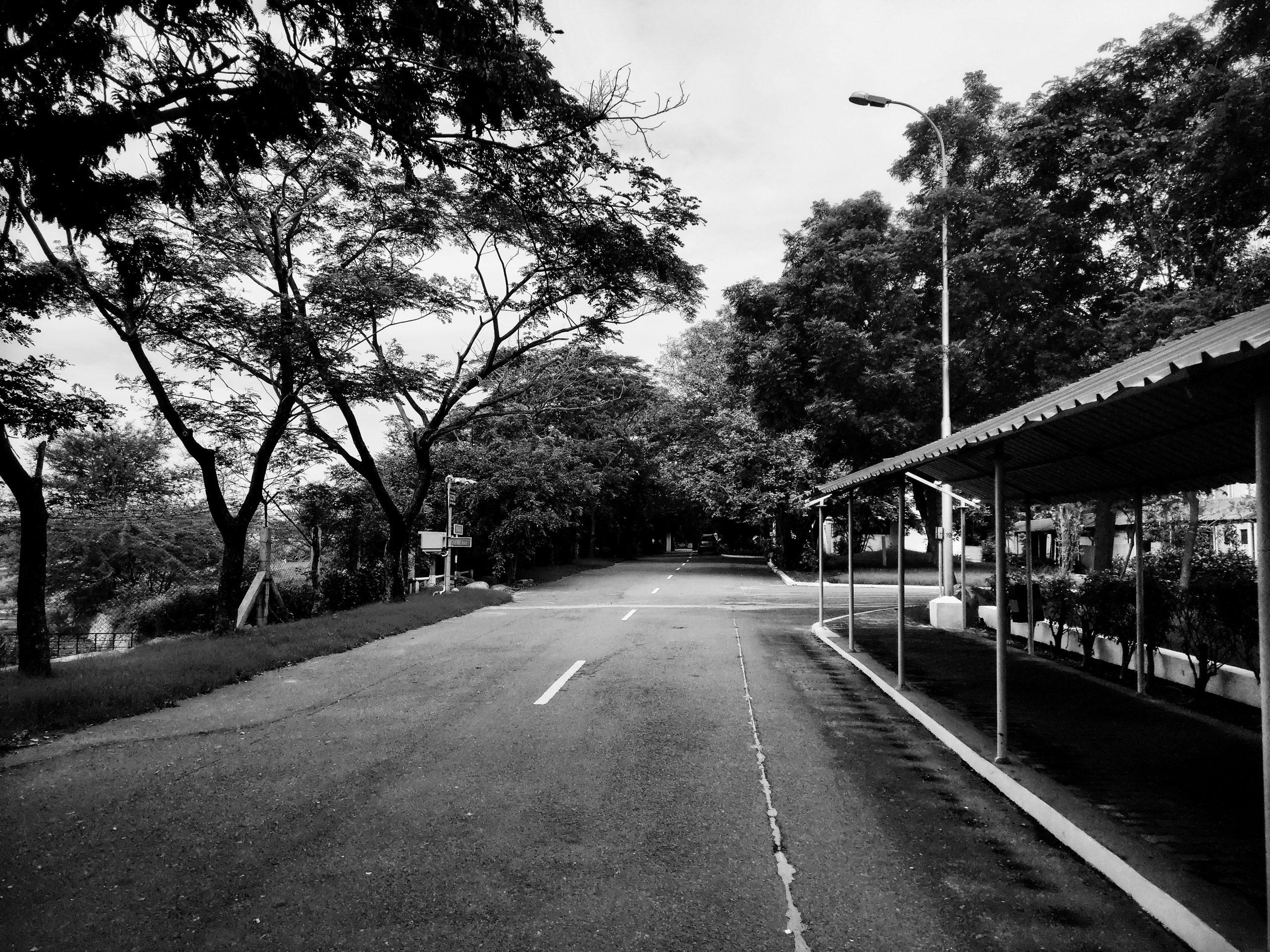 the path among trees