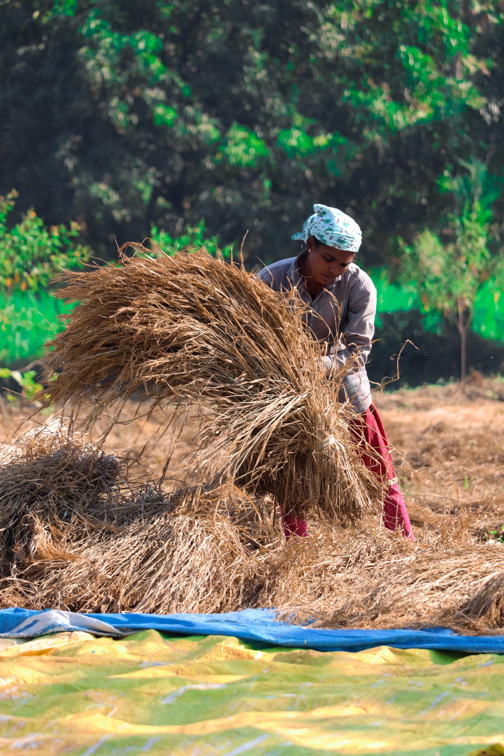 A lady farmer
