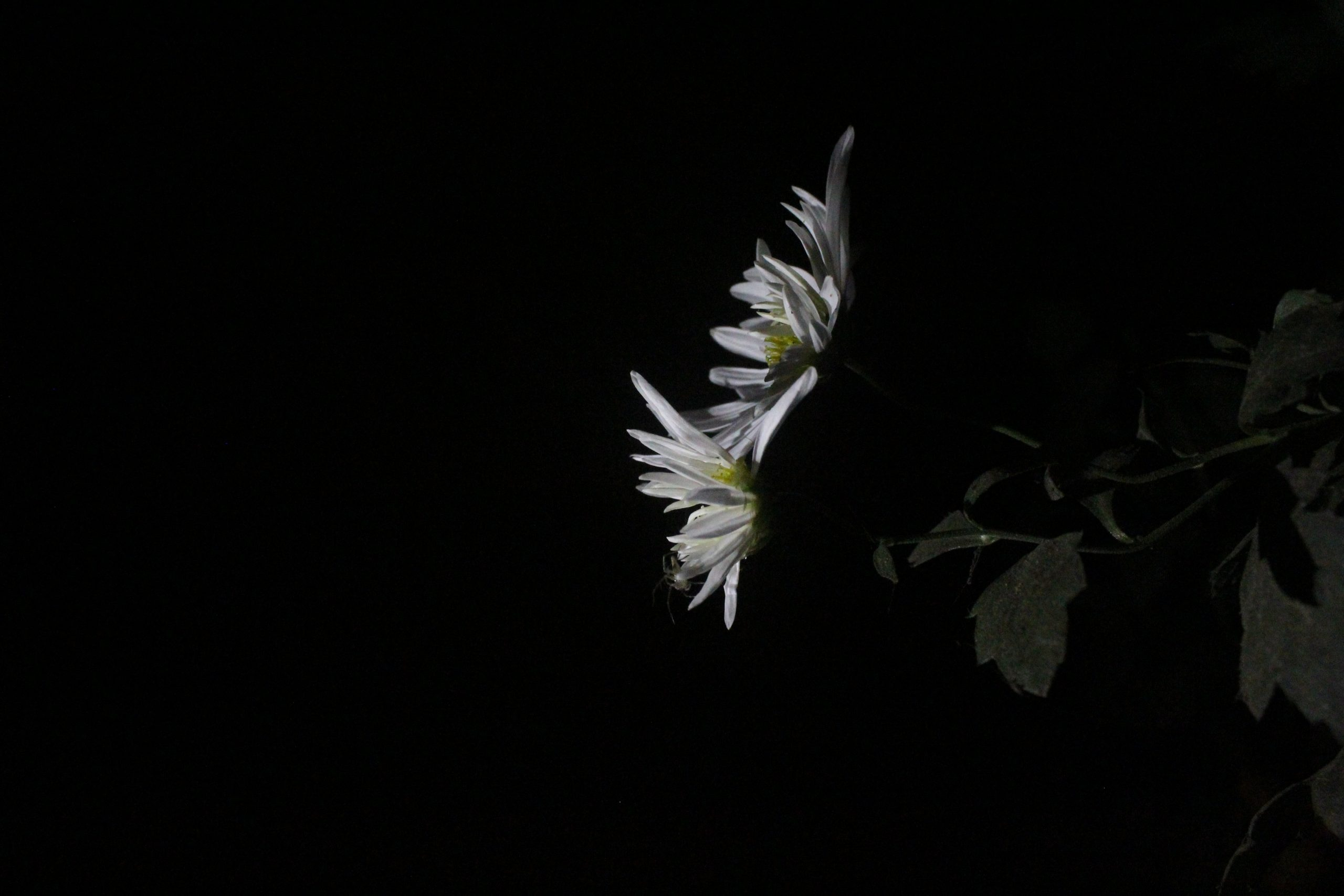 Flower portrait in dark