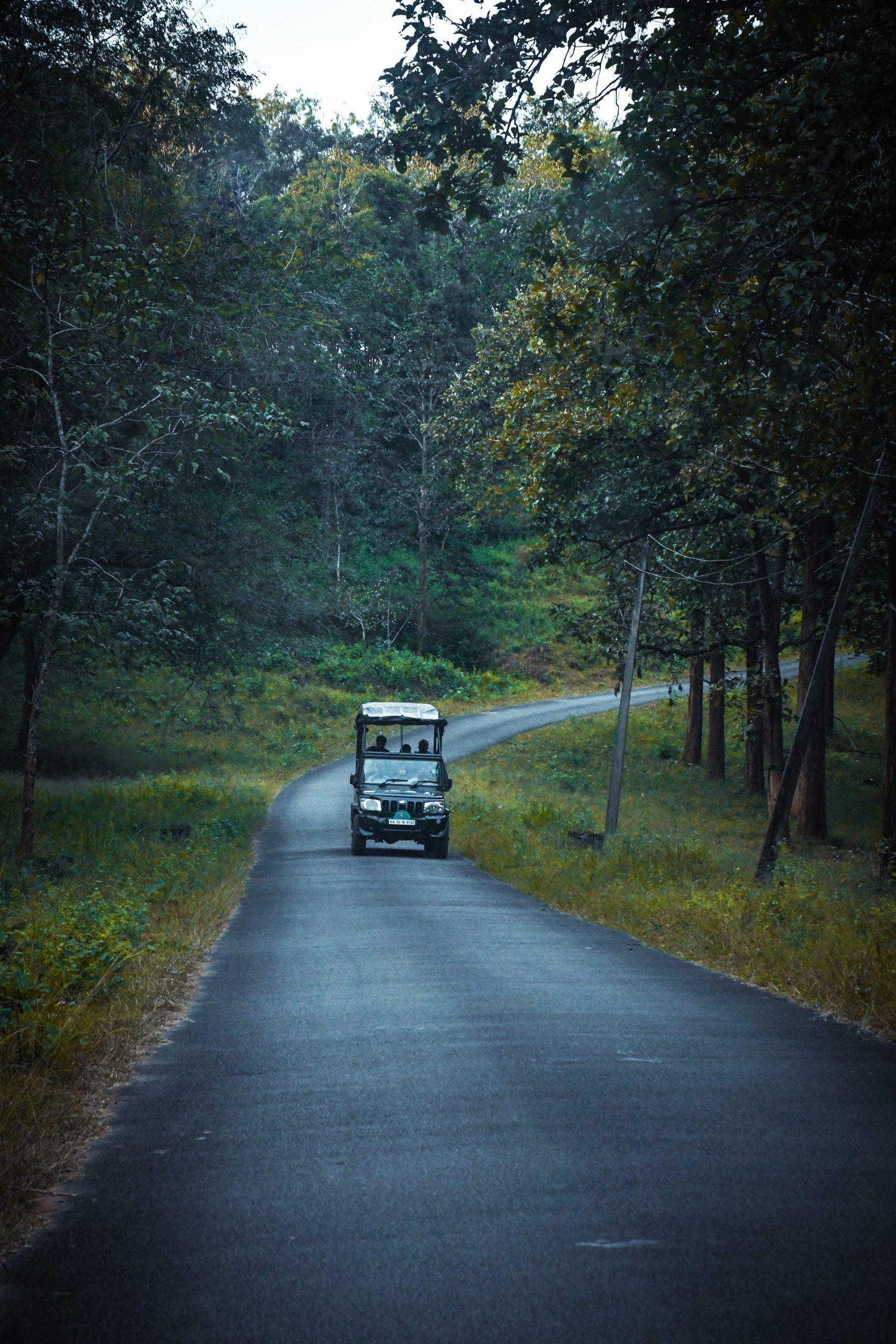 A jeep in Jungle