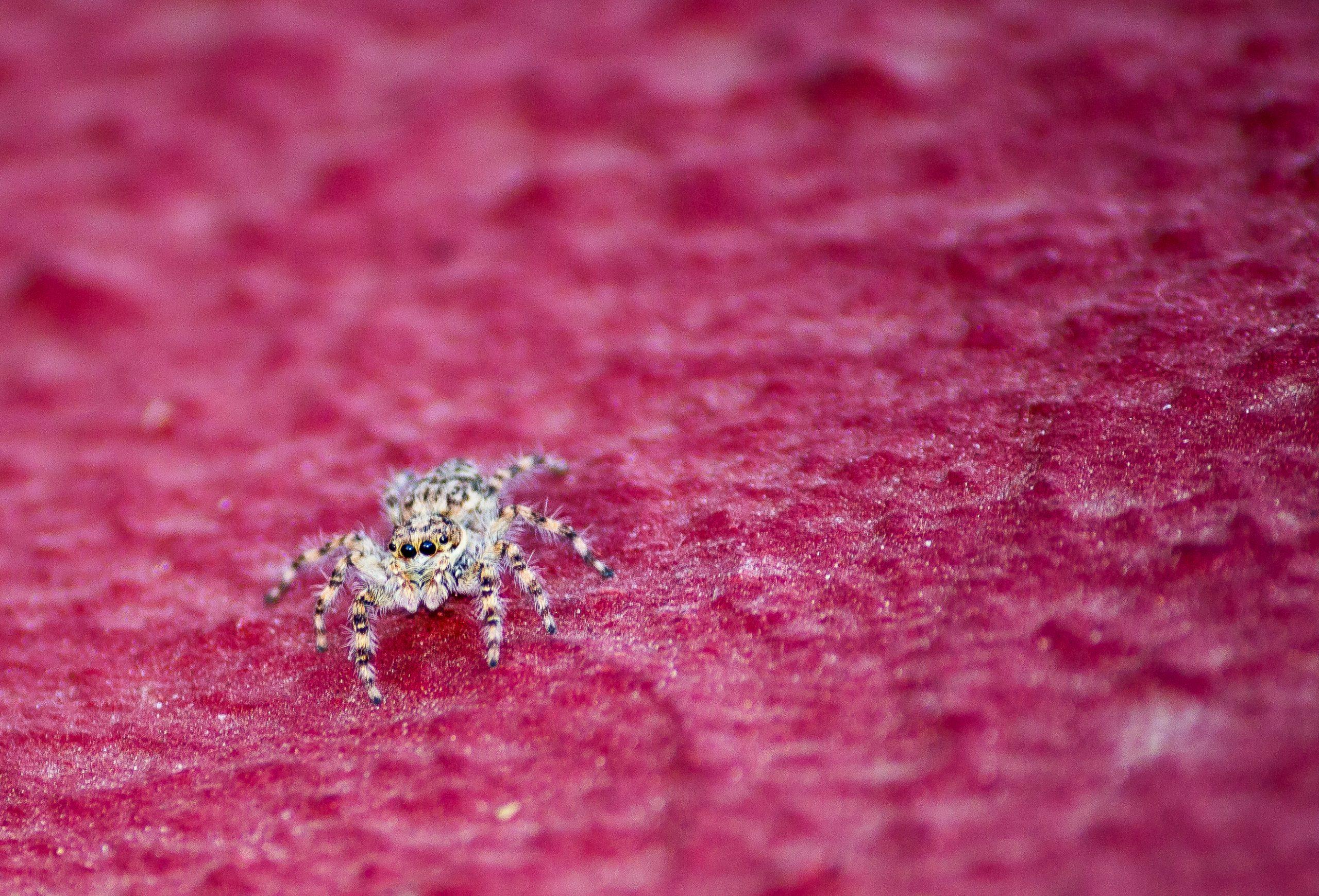 spider on pink floor