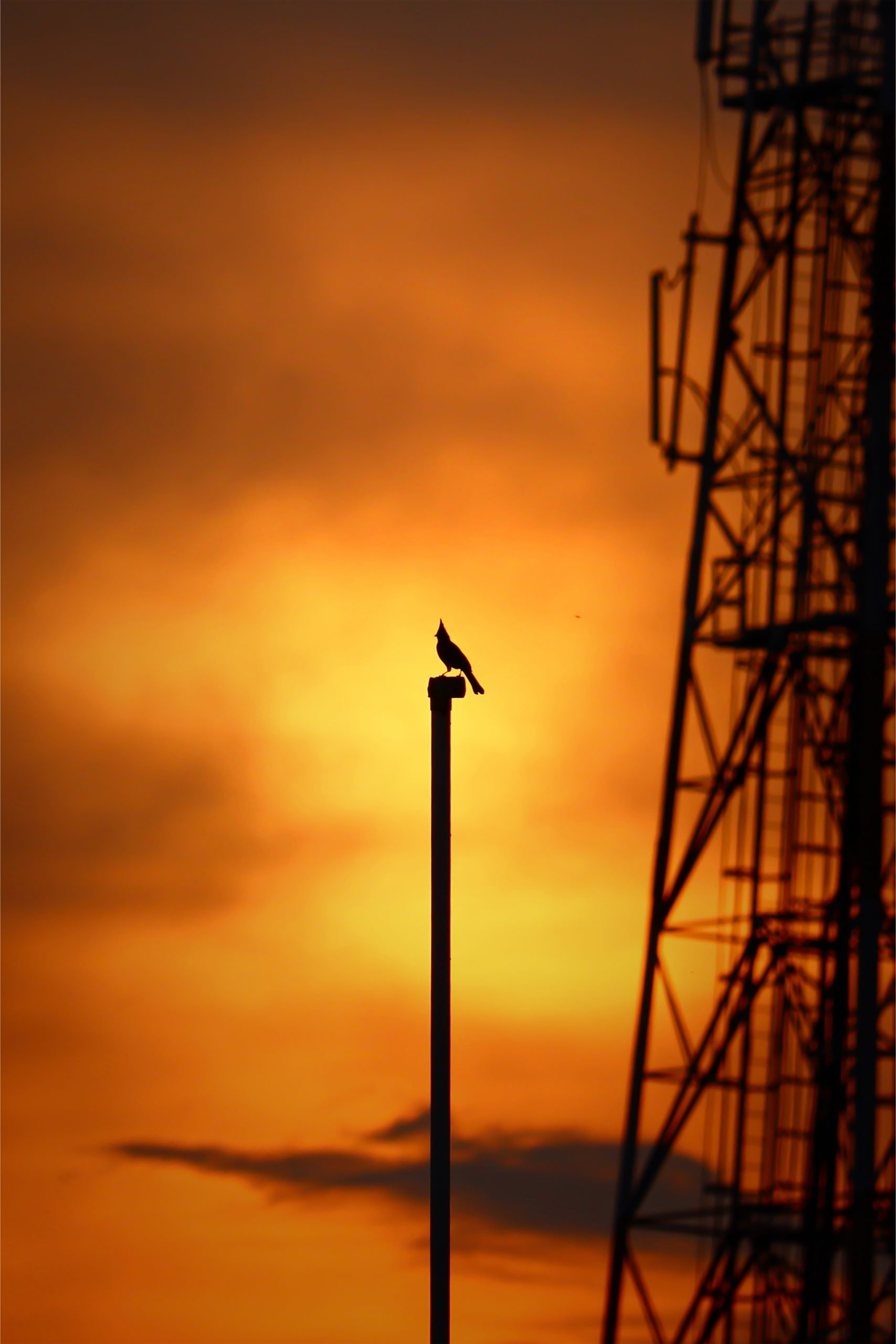 A bird on a pole