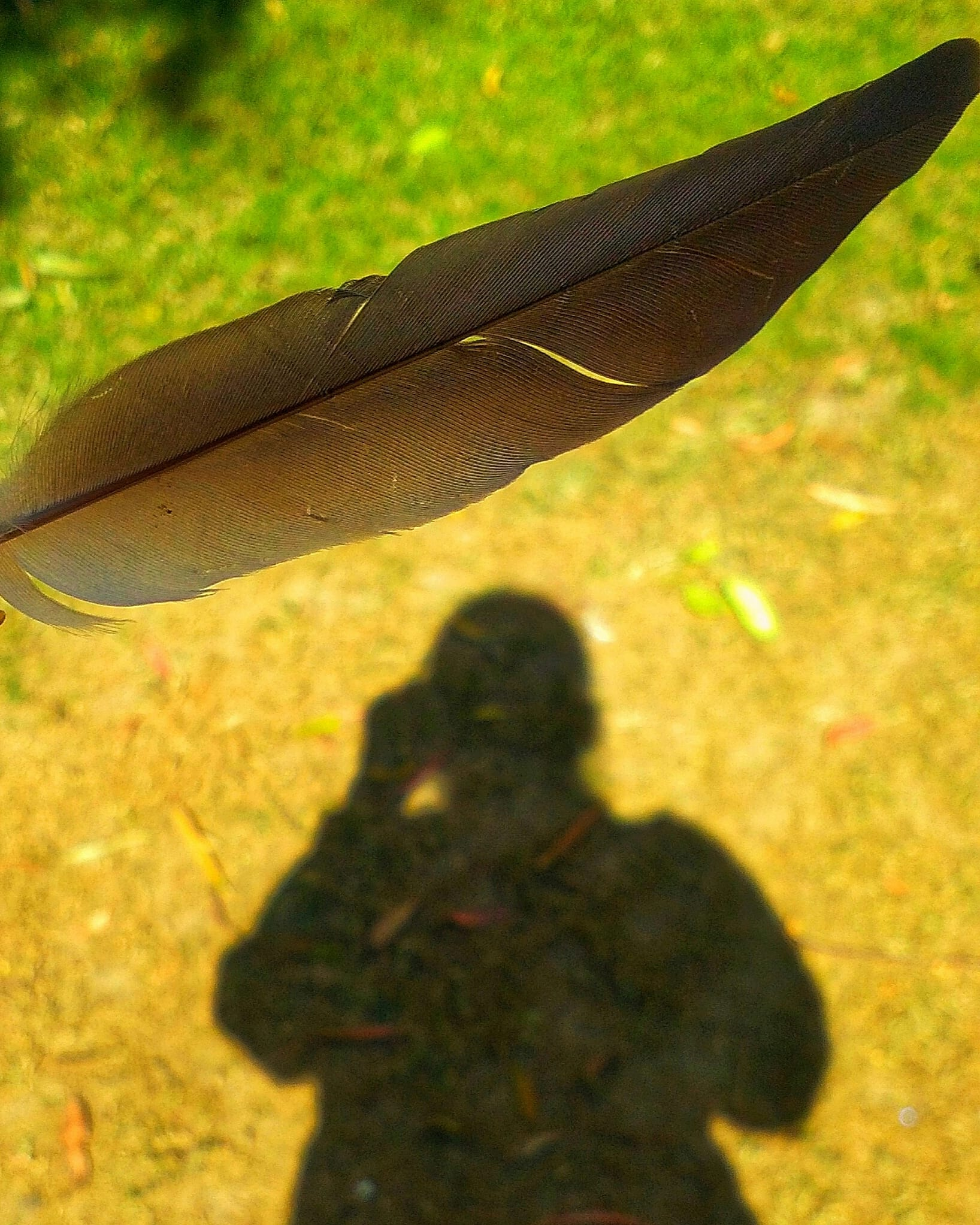 A bird's feather and shadow