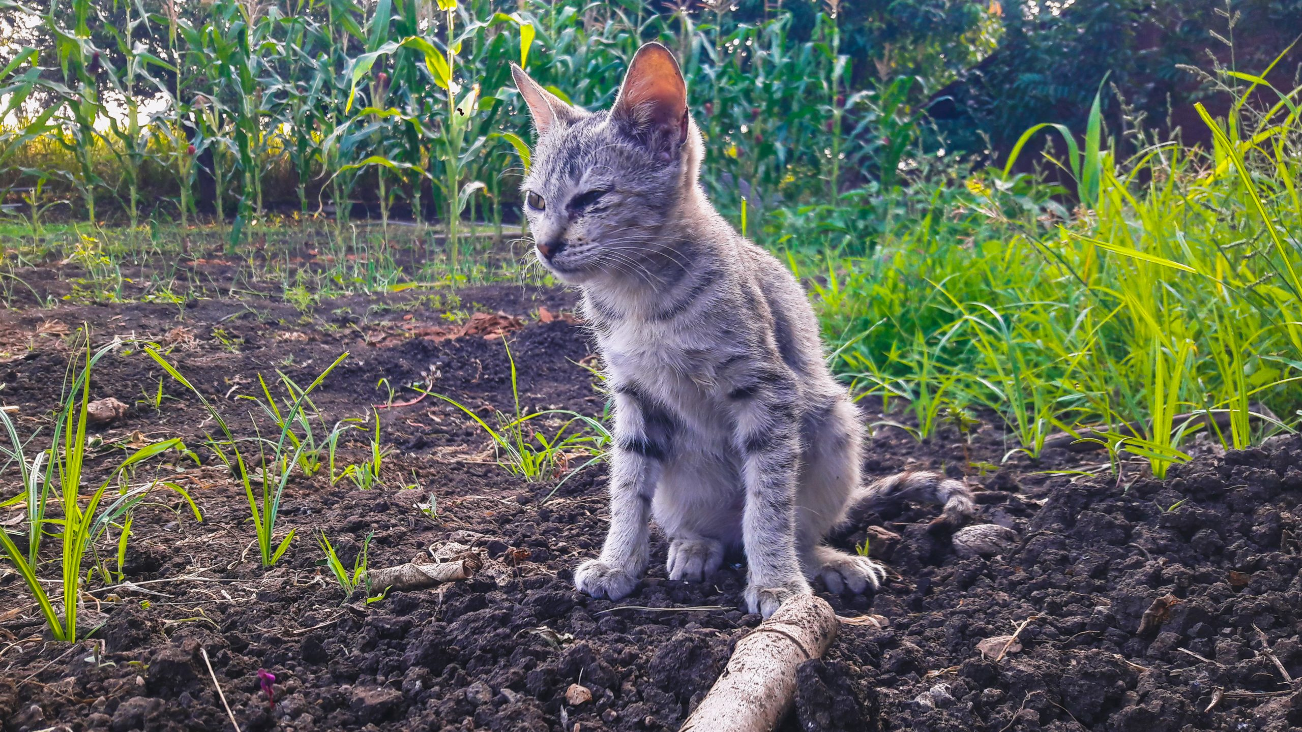 A cat in a field