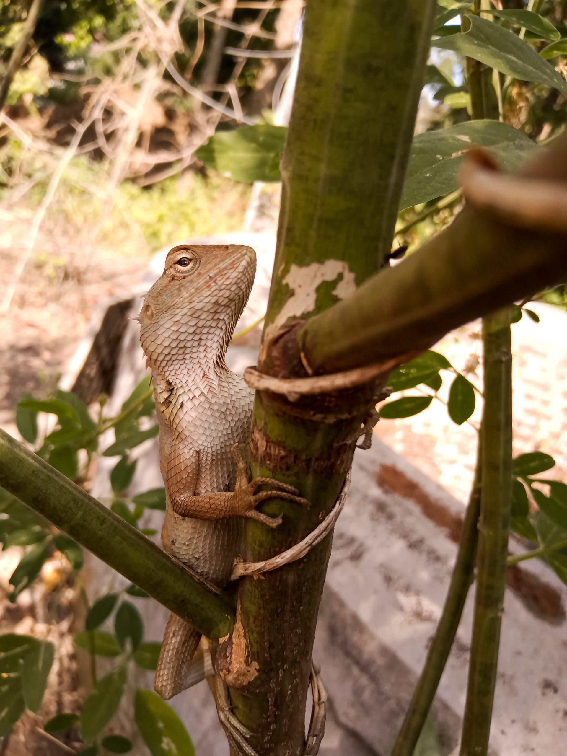 A chameleon on a plant