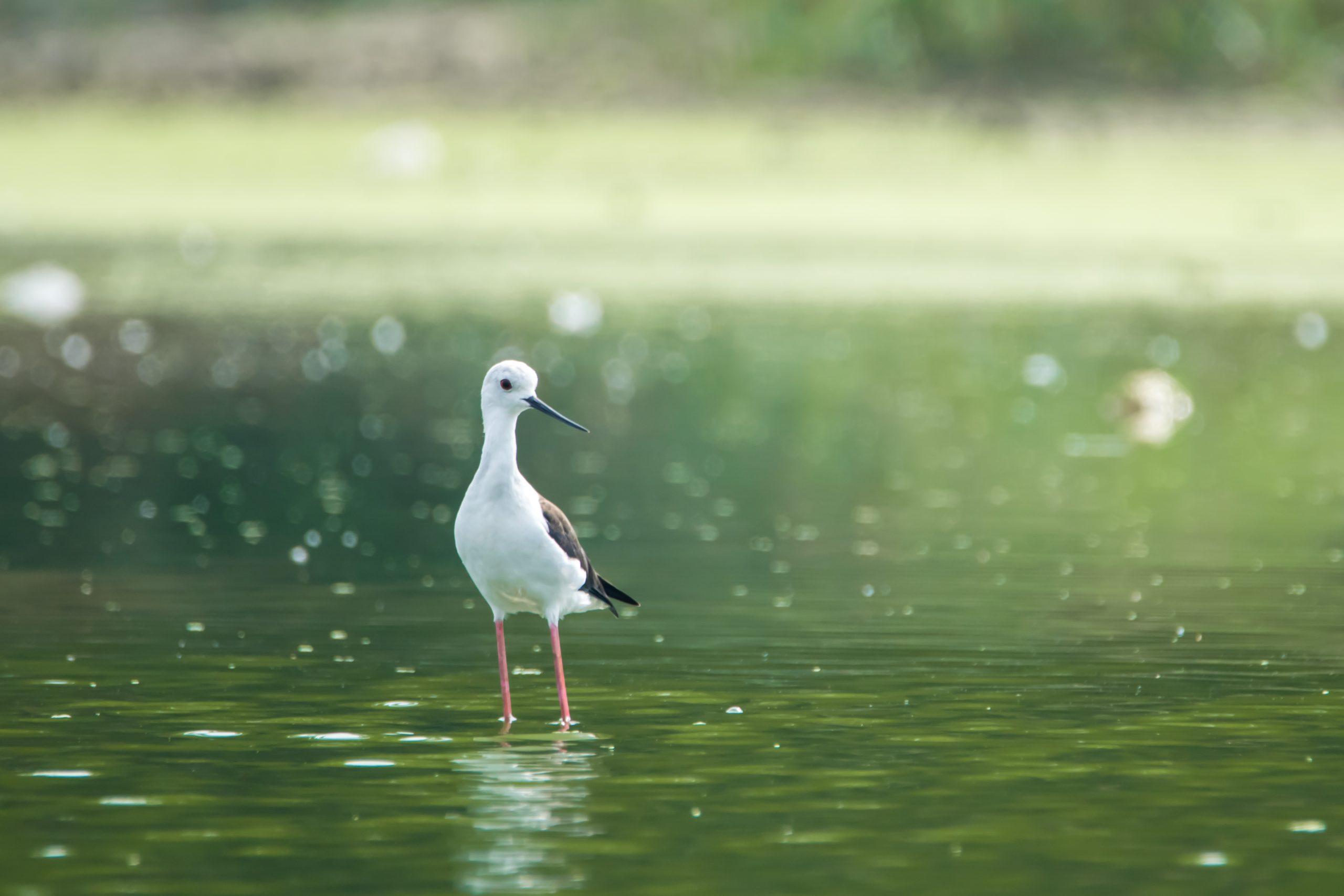 A coastal bird
