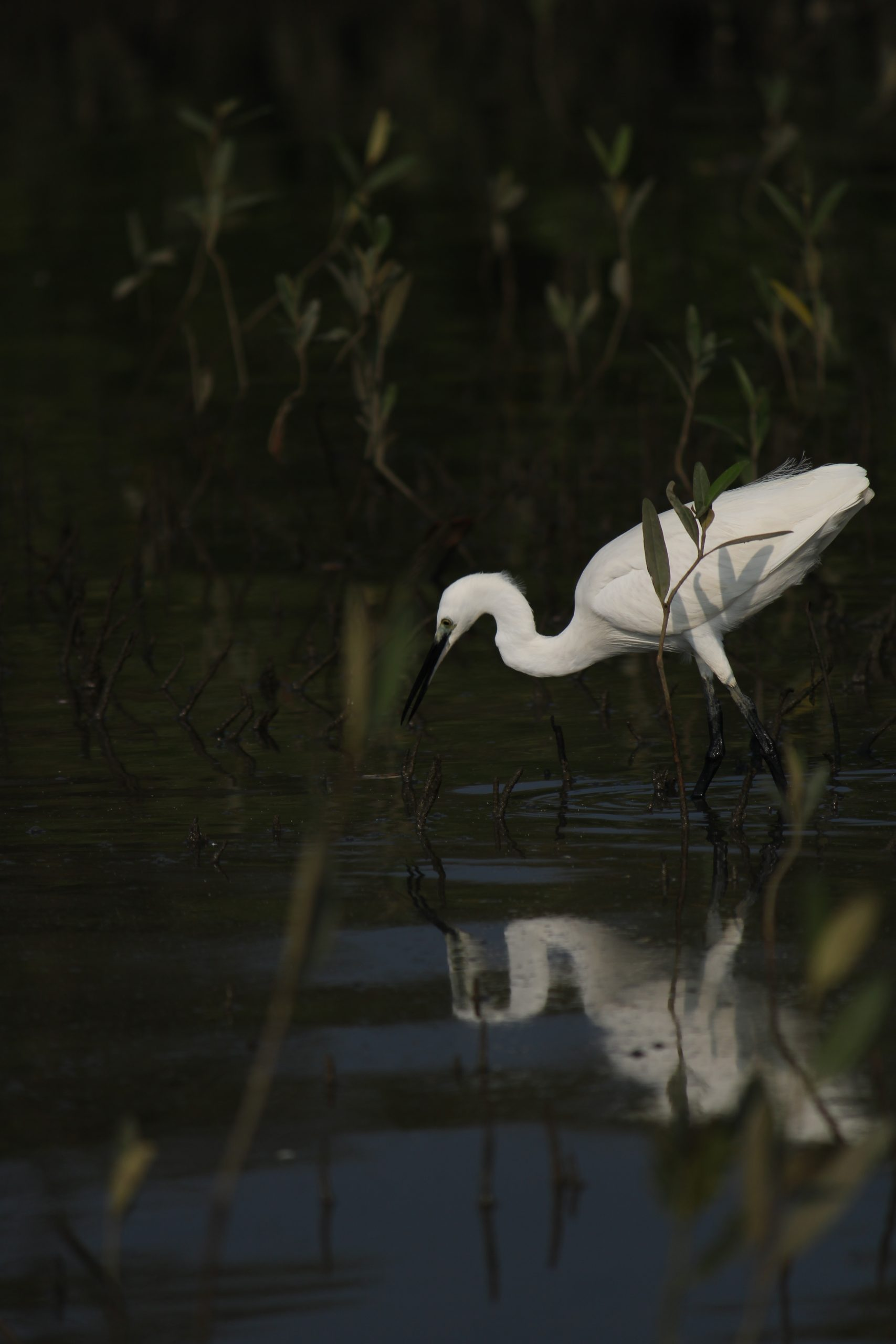 A crane bird in a pond