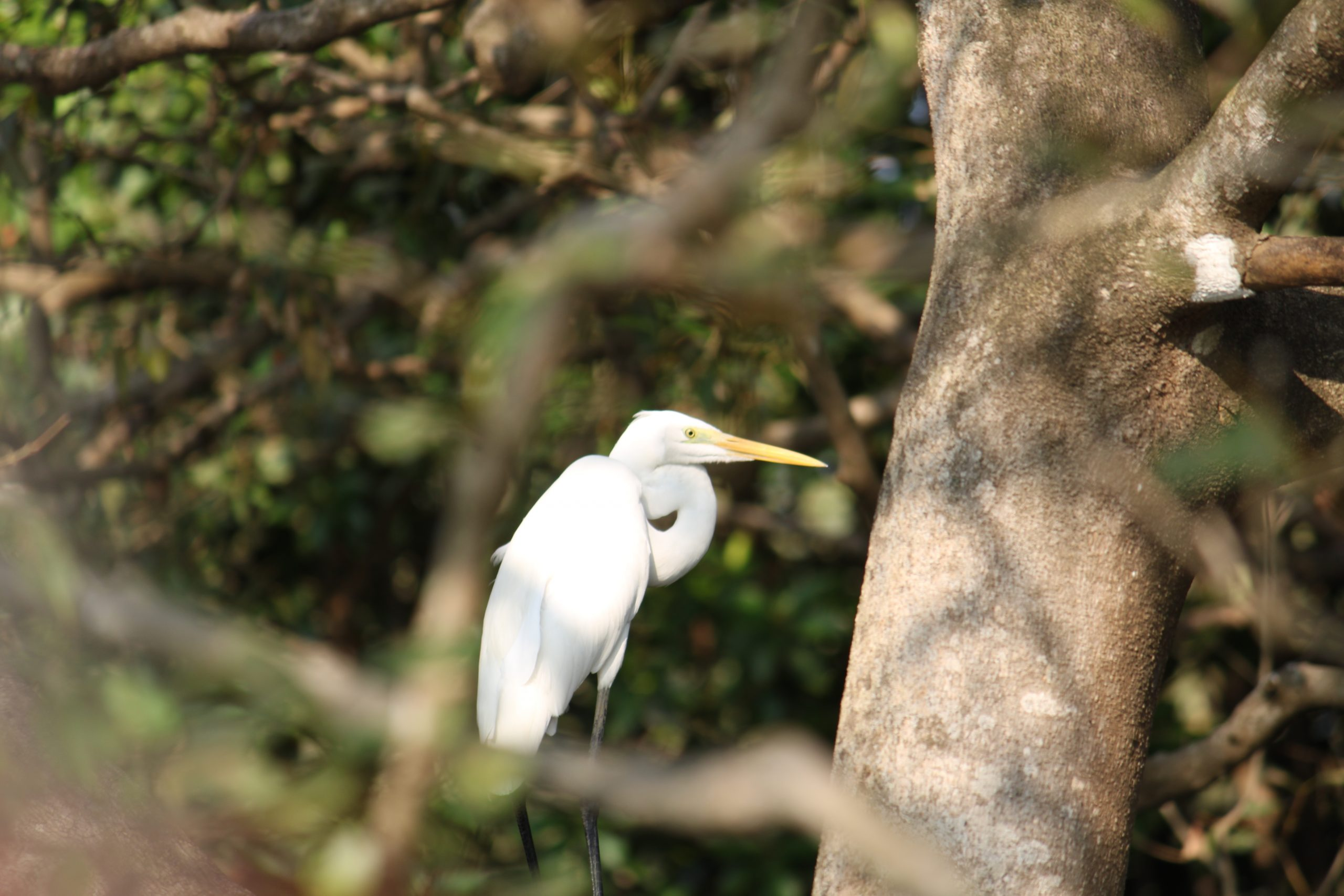 Crane on tree