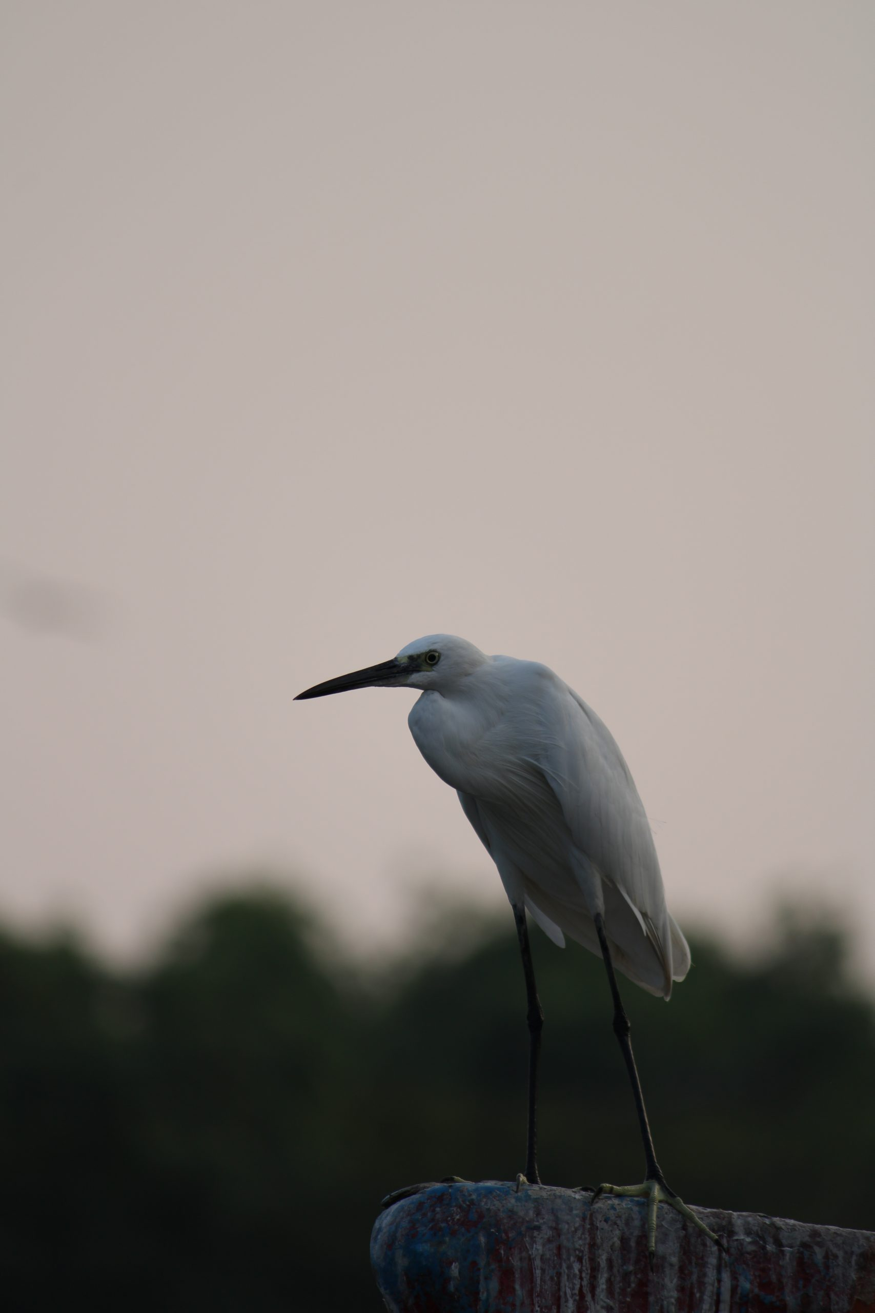 A crane bird sitting