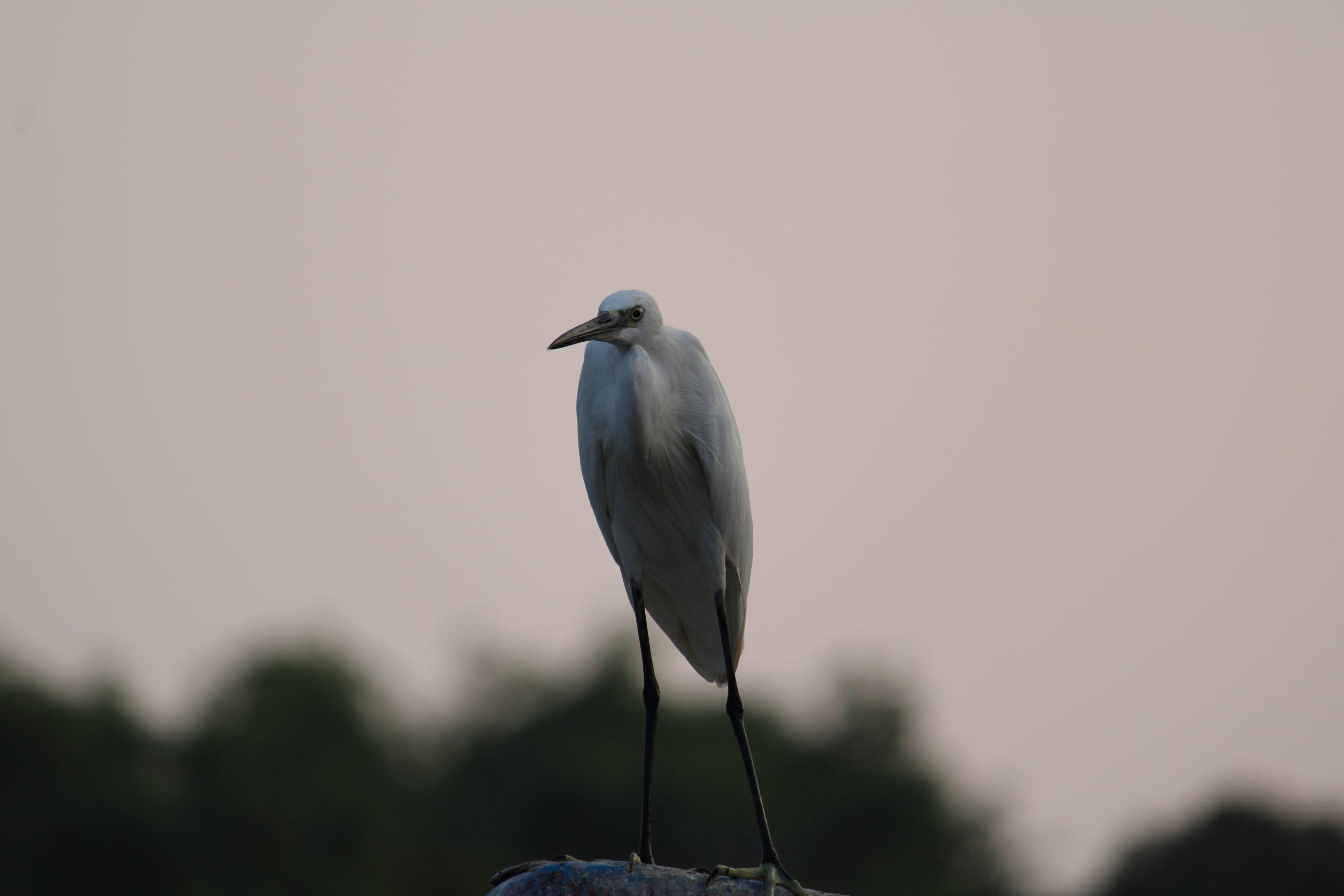 A crane bird sitting on the rock