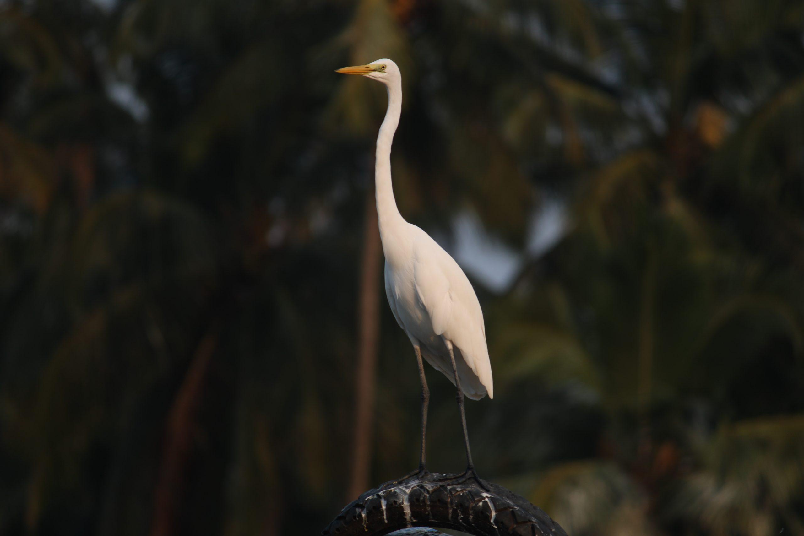 A crane bird sitting on tire