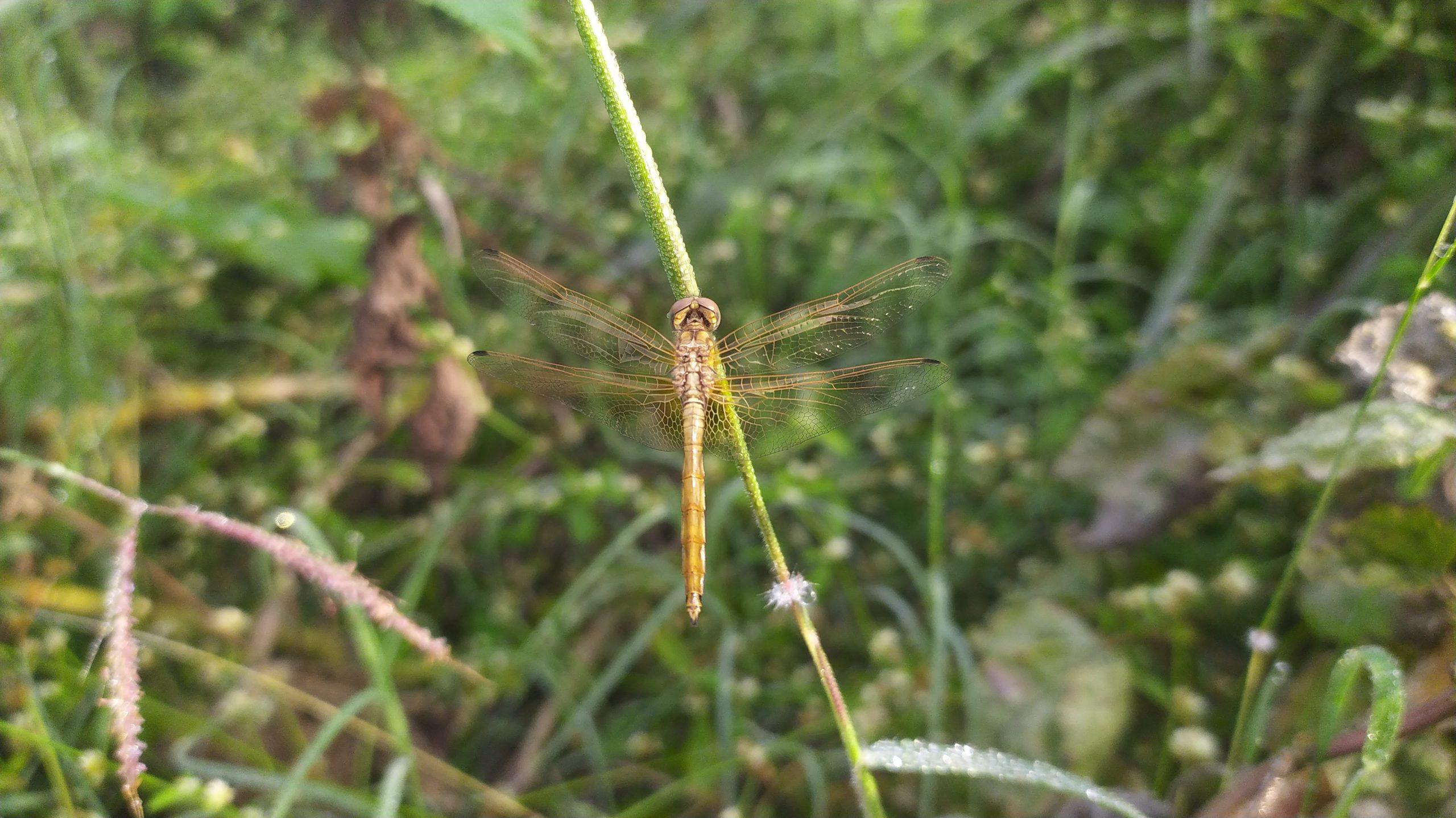 A dragonfly on stem