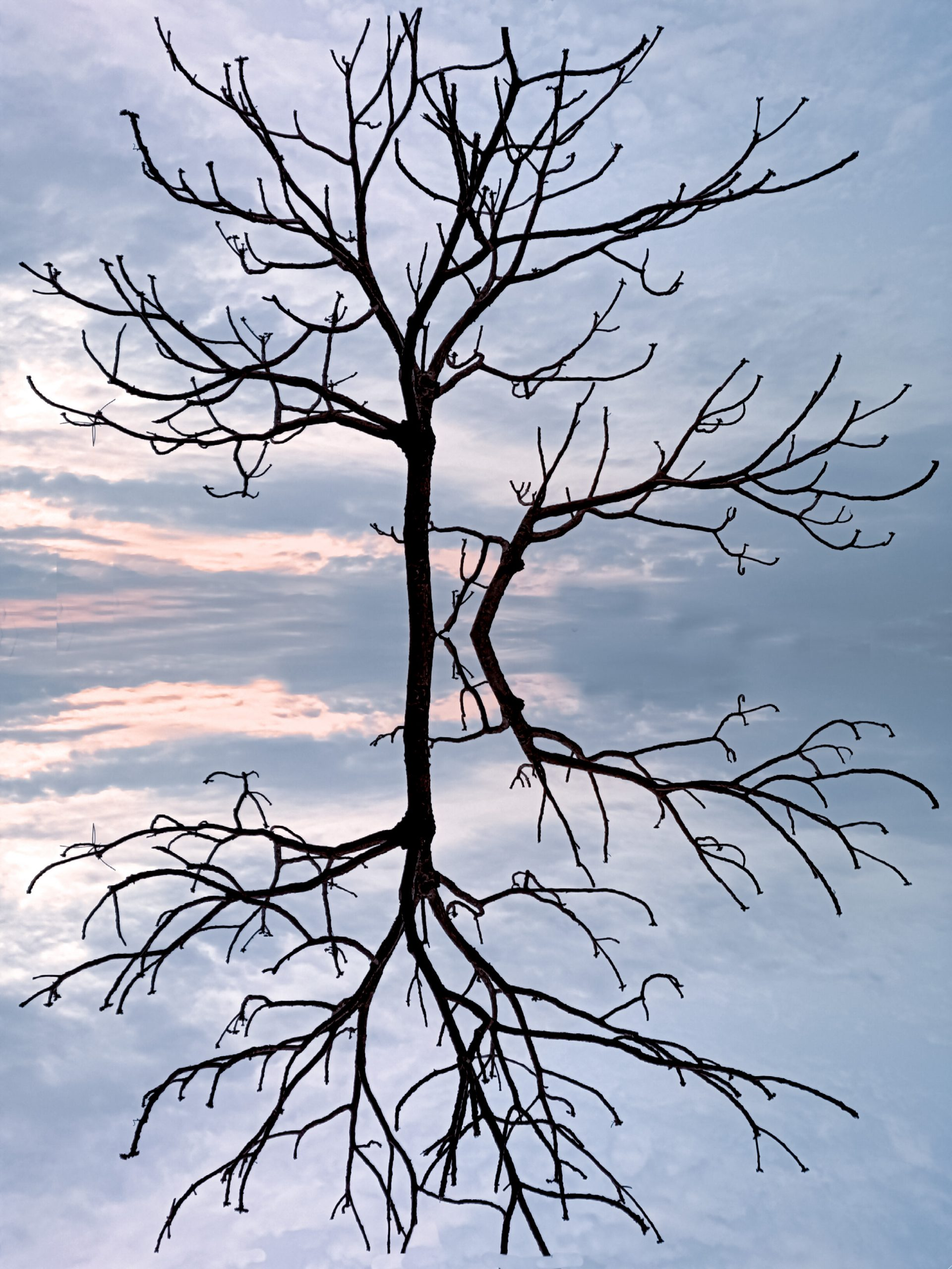 A dry tree reflection