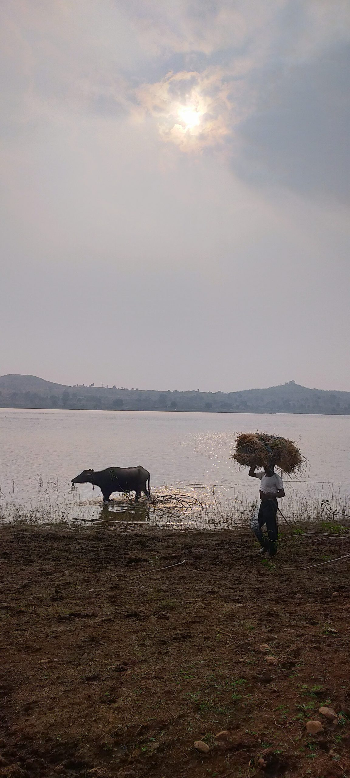 A farmer with his buffalo at beachside