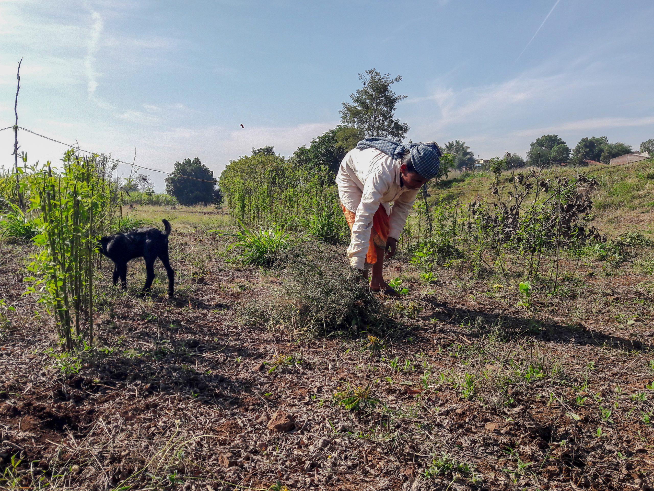 A farmer working in field